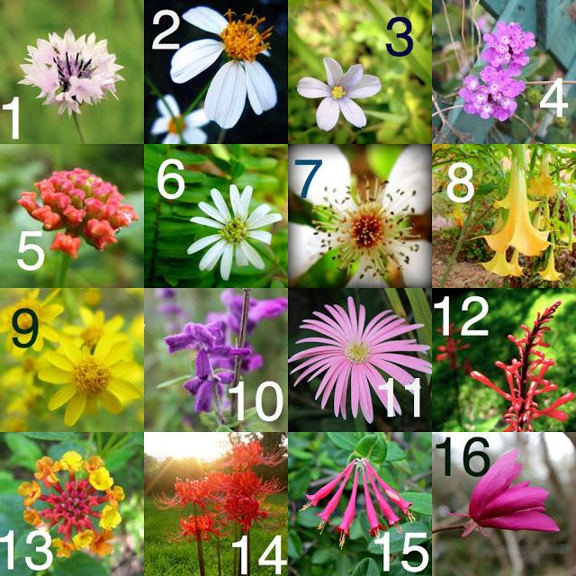 unidentified+flowers.jpg