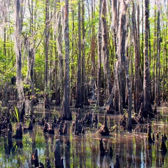 Honey+Island+Swamp_phixr.jpg