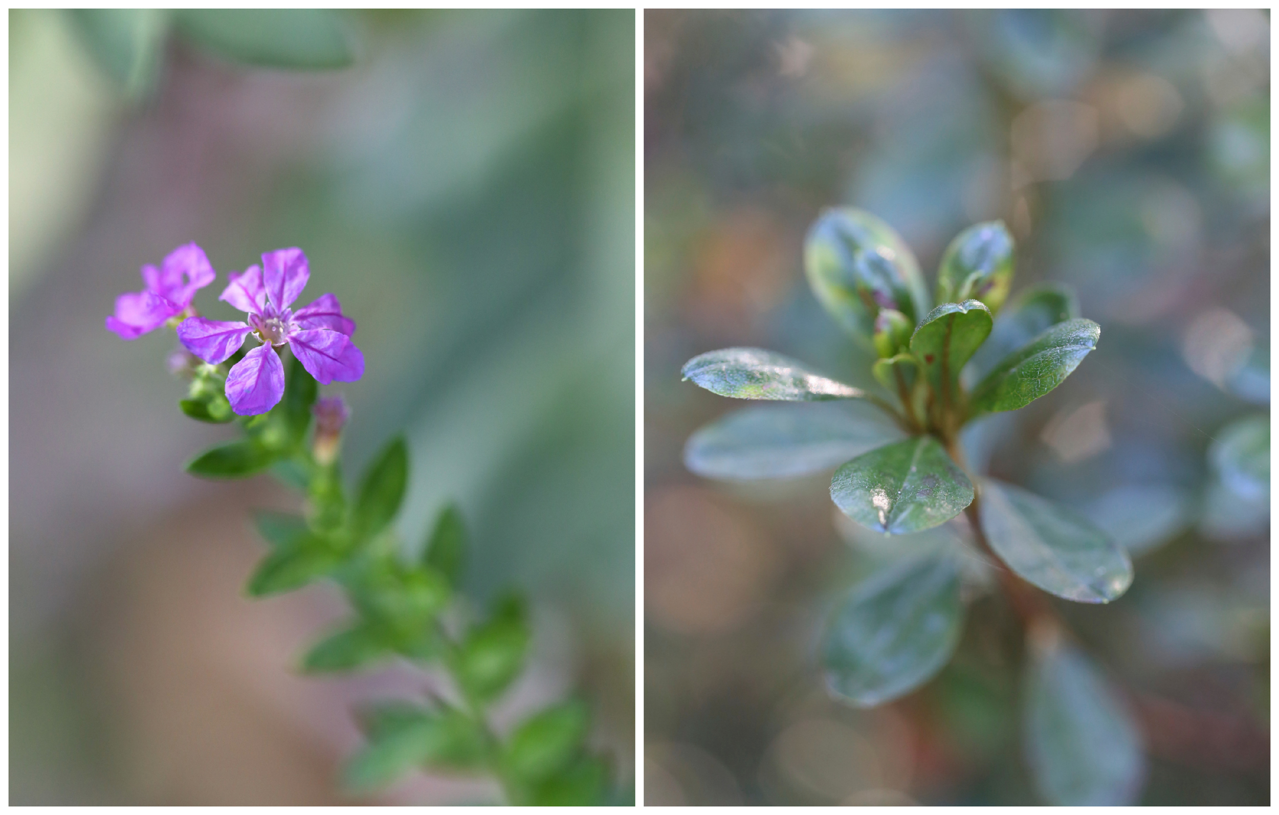 macro flower and leaves (Uninvented Colors Photography)