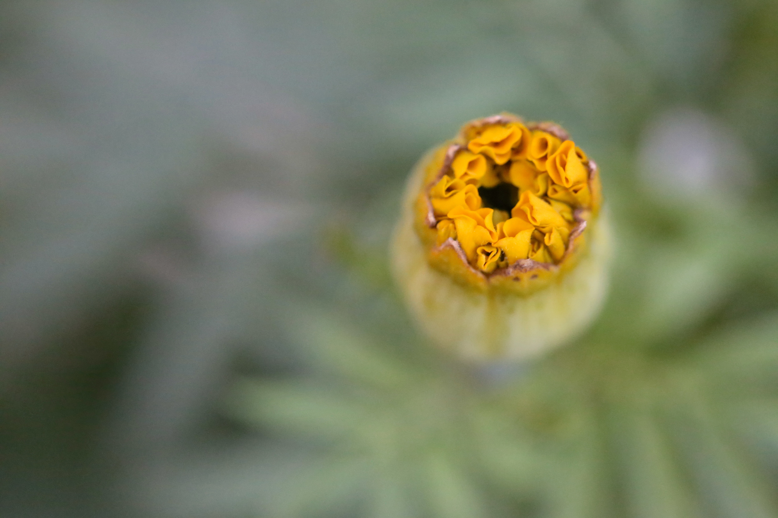 macro closed flower (Uninvented Colors Photography)