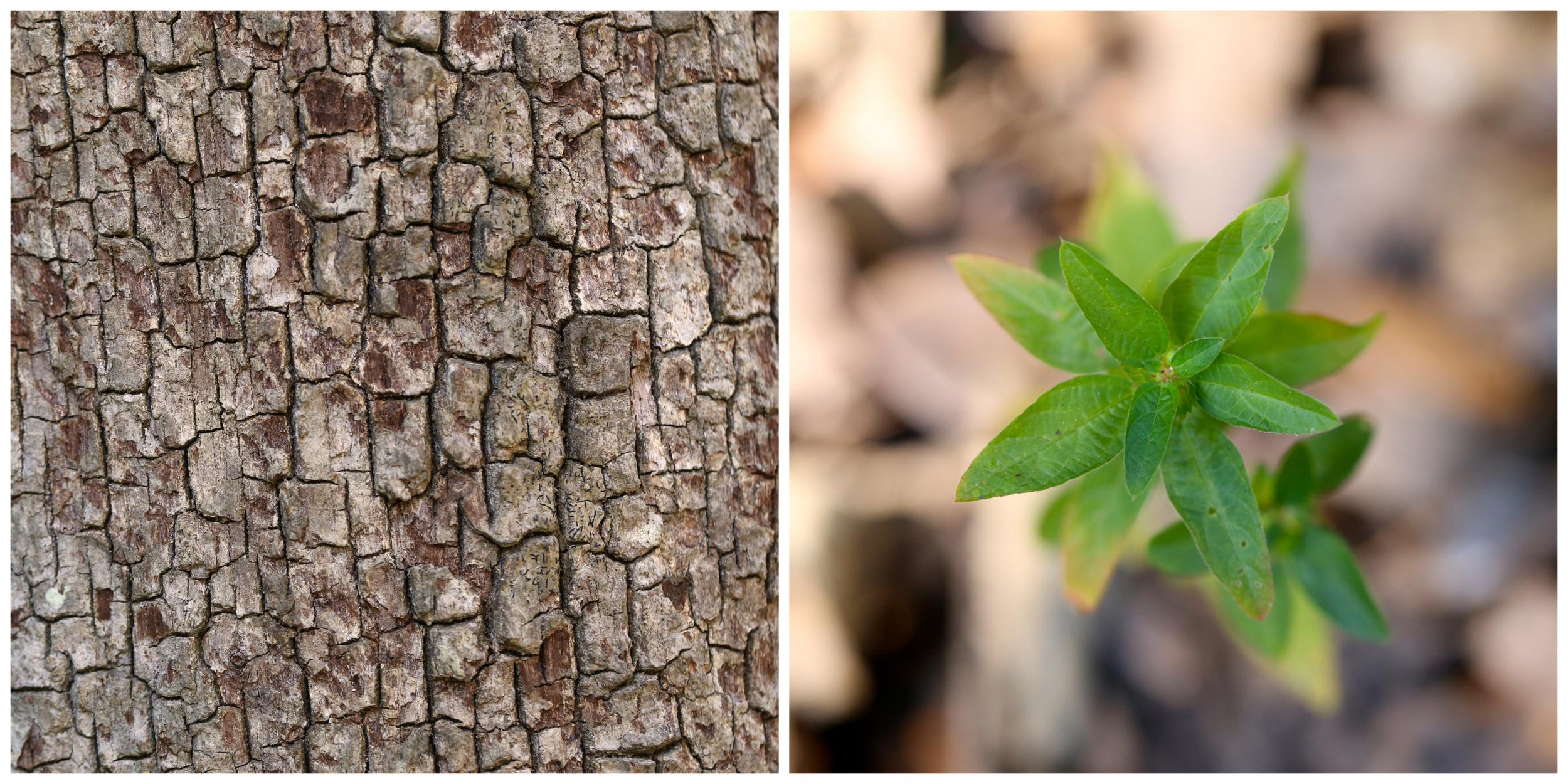 tree bark and macro plant