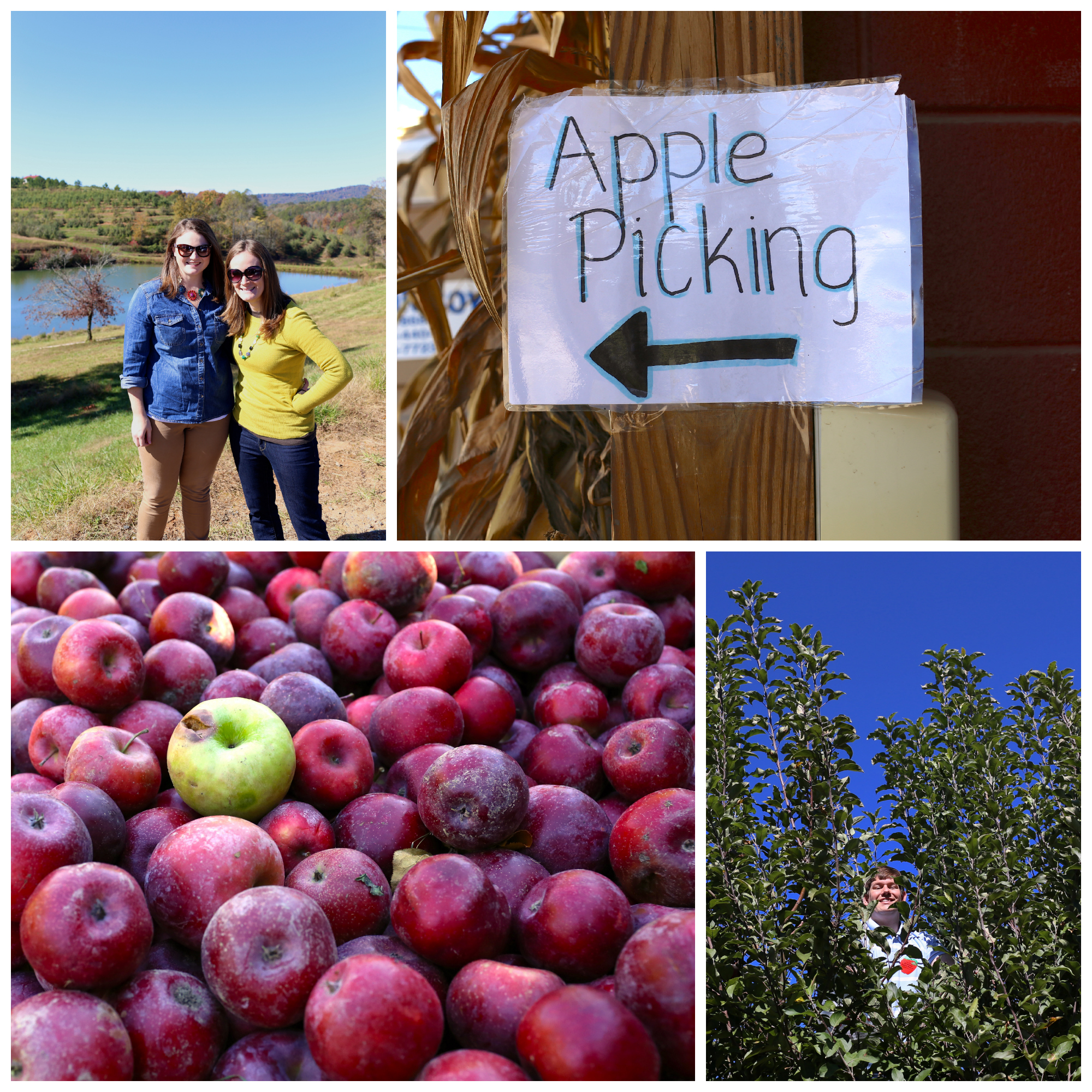 Apple Picking at BJ Reece Orchards (Uninvented Colors Photography)
