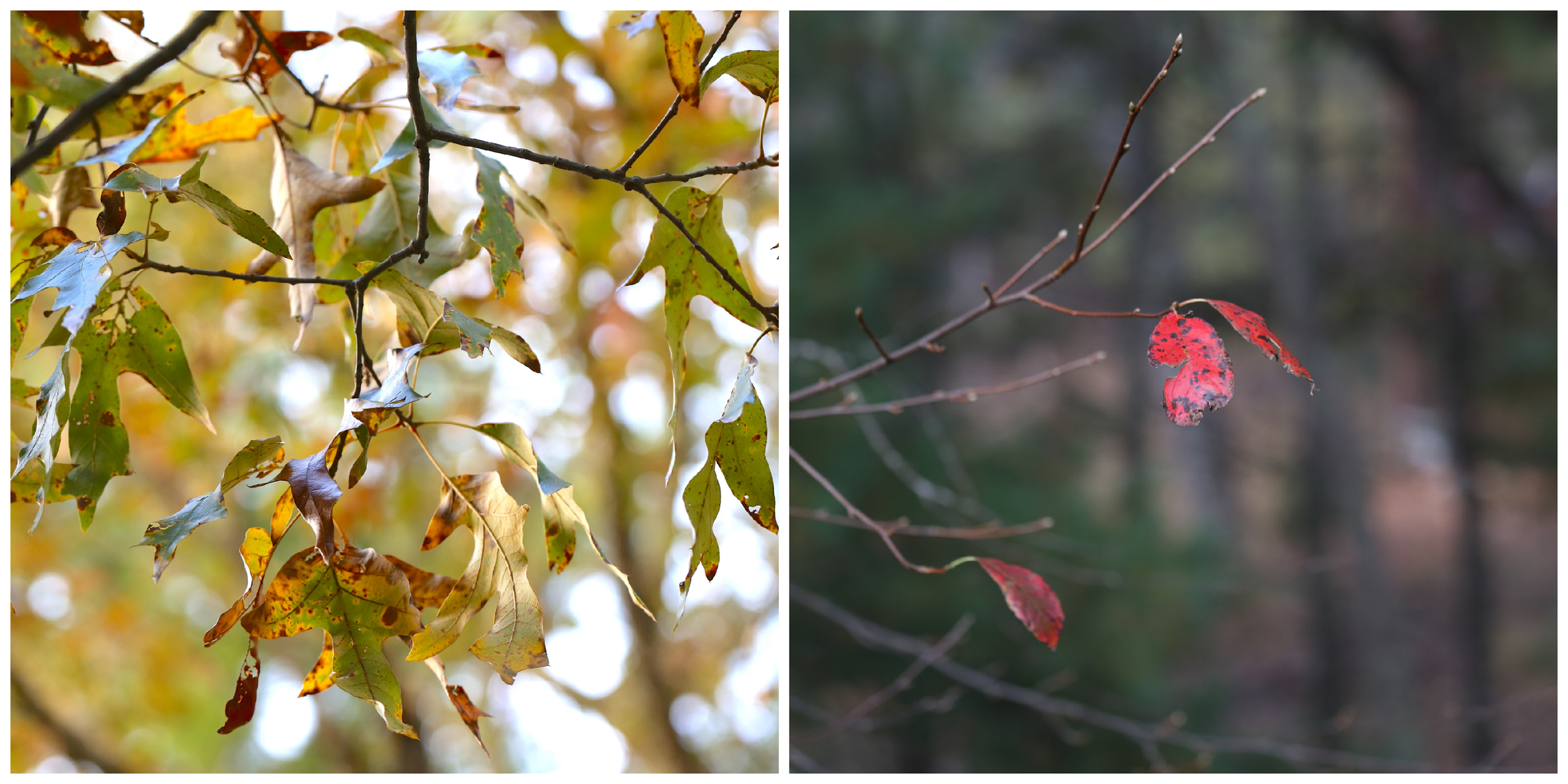autumn leaves in the woods (Uninvented Colors Photography)