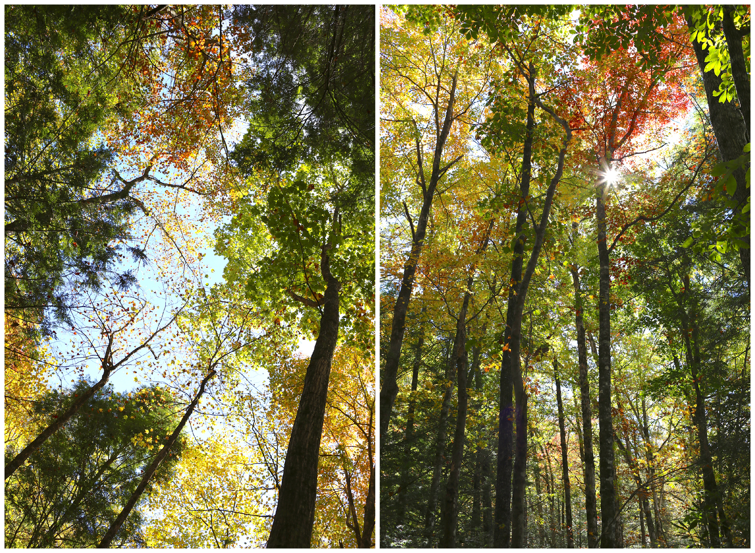 autumn trees in North Georgia (Uninvented Colors Photography)