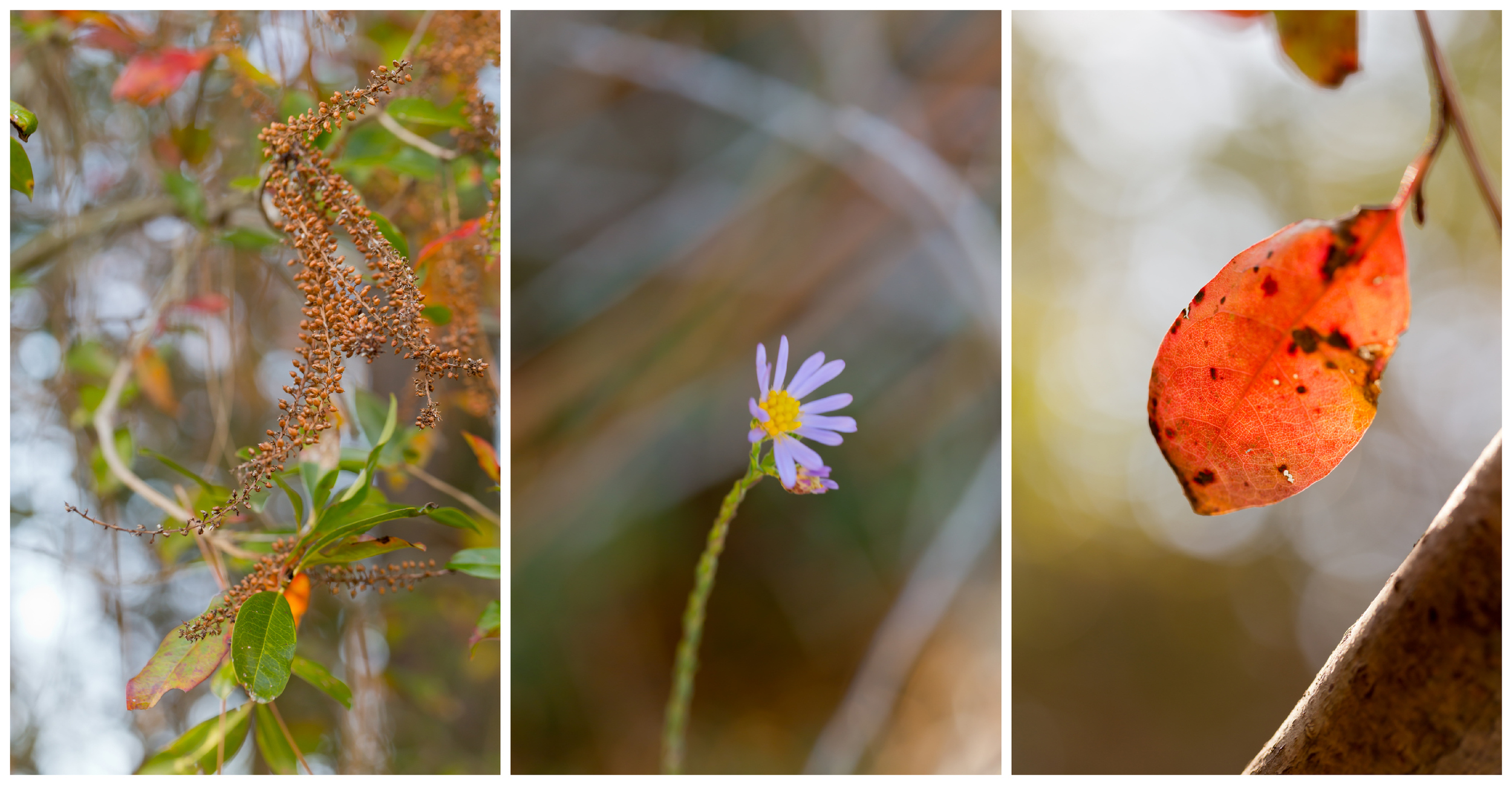 autumn nature macro (Uninvented Colors Photography)