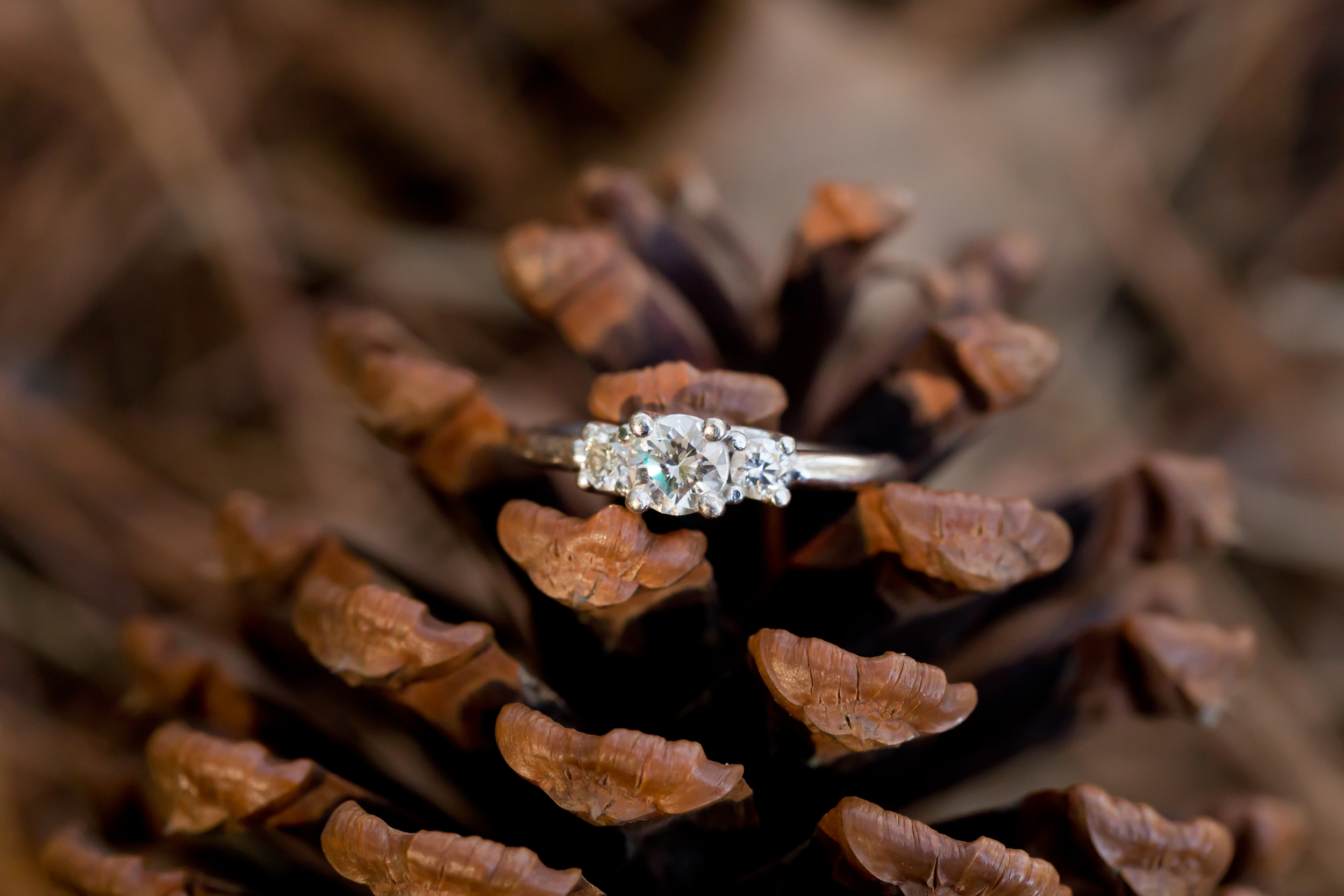 diamond engagement ring on pinecone (Uninvented Colors Photography)