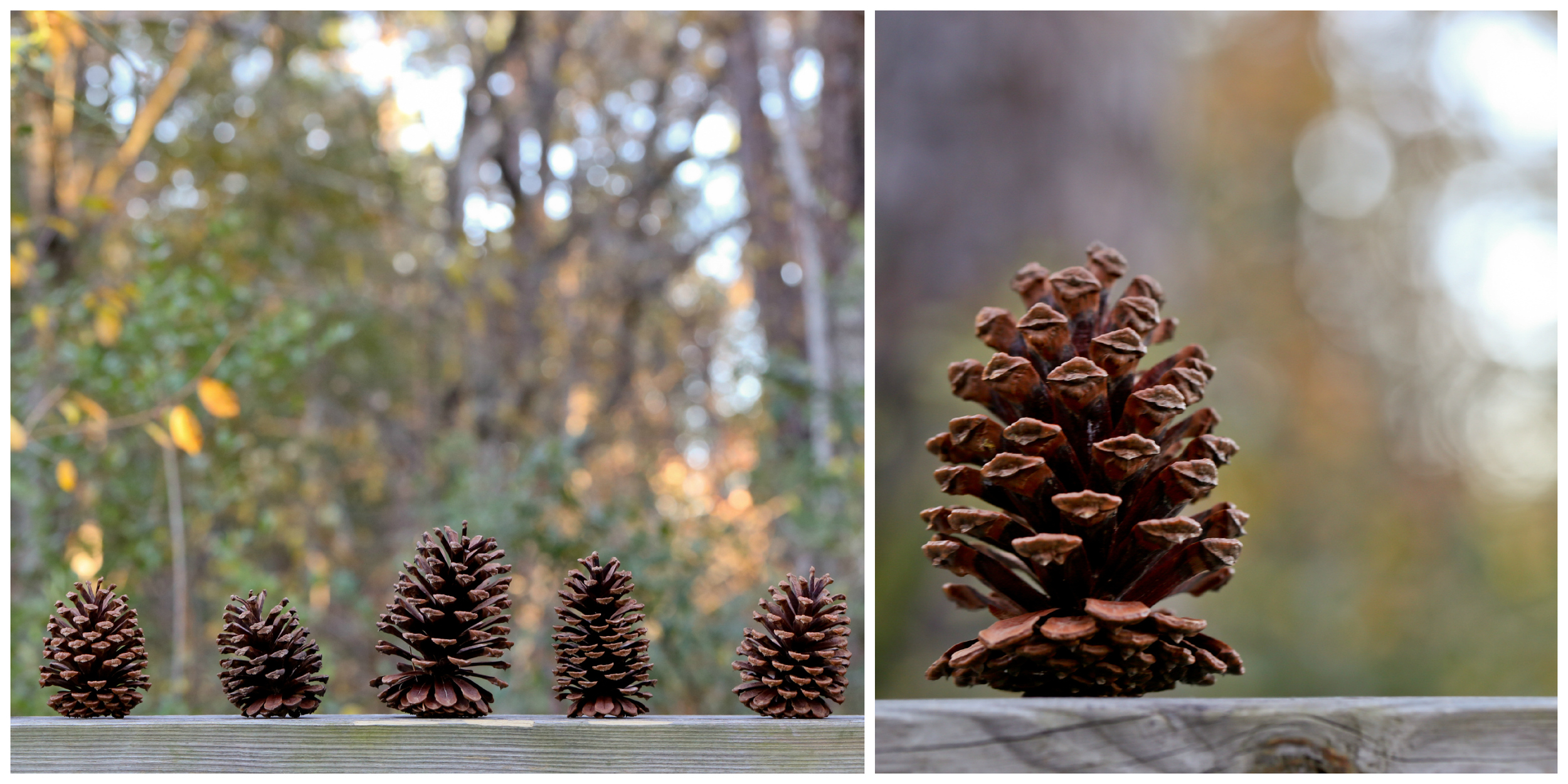 pine cone nature photos by Uninvented Colors Photoragphy