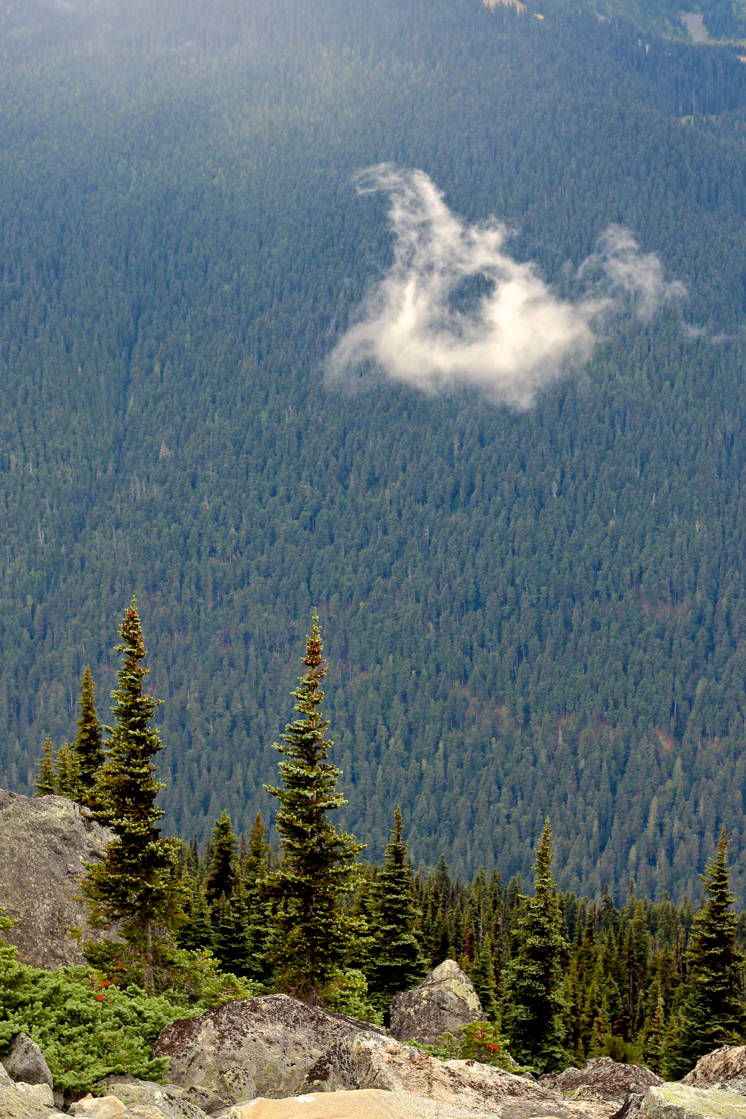 Mountain landscape with pine trees and cloud in Whistler, British Columbia