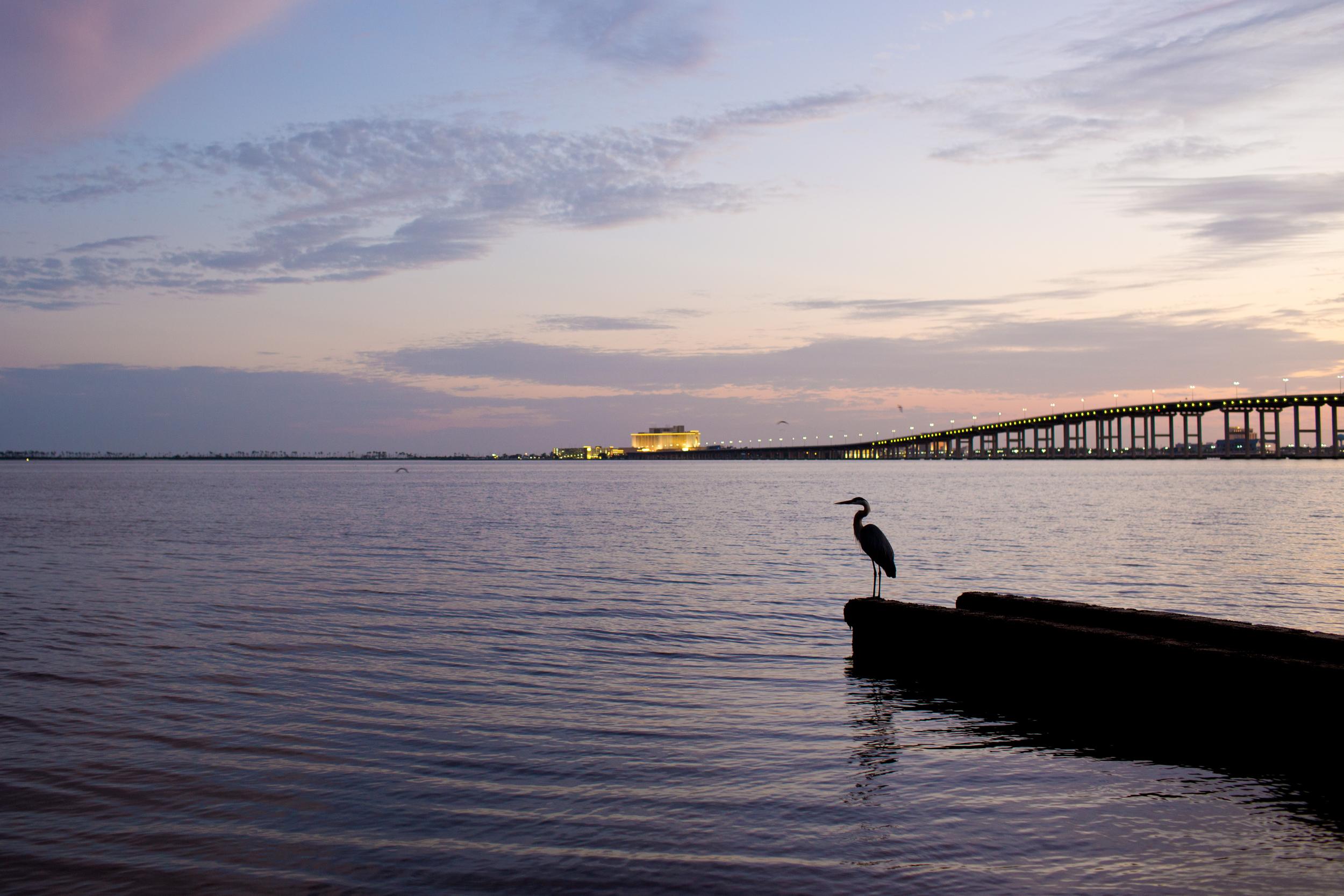 Heron at dusk on Front Beach Ocean Springs