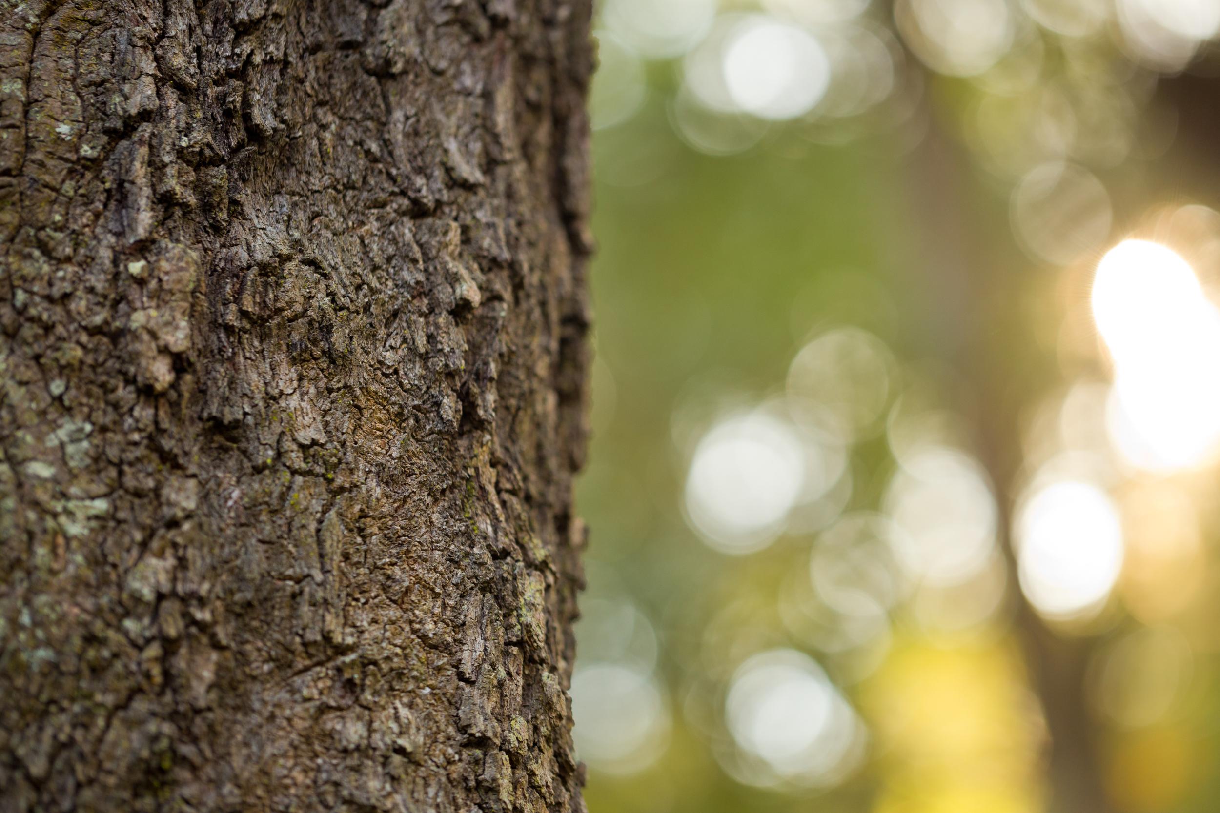tree bark, bokeh