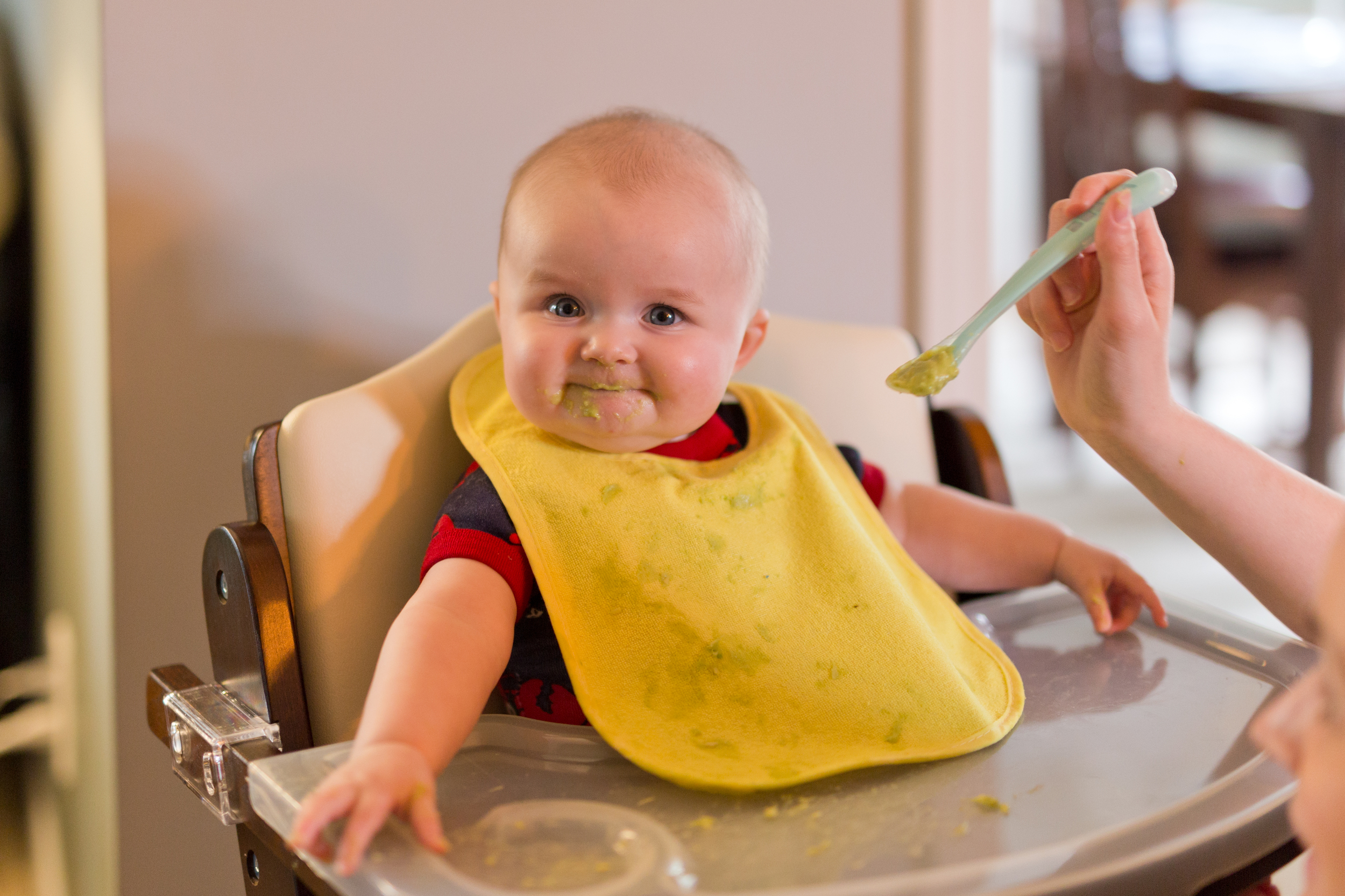 avocado as baby's first solid food (with bib in high chair)