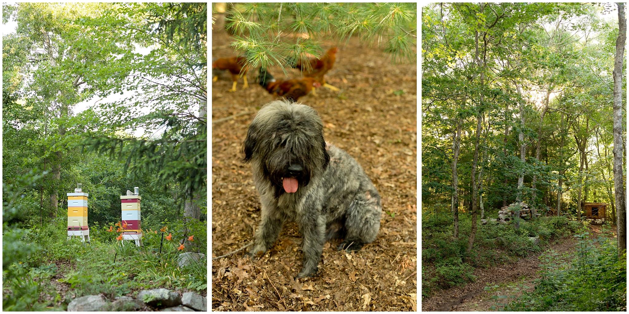 beekeeping, dog, chicken coop in woods