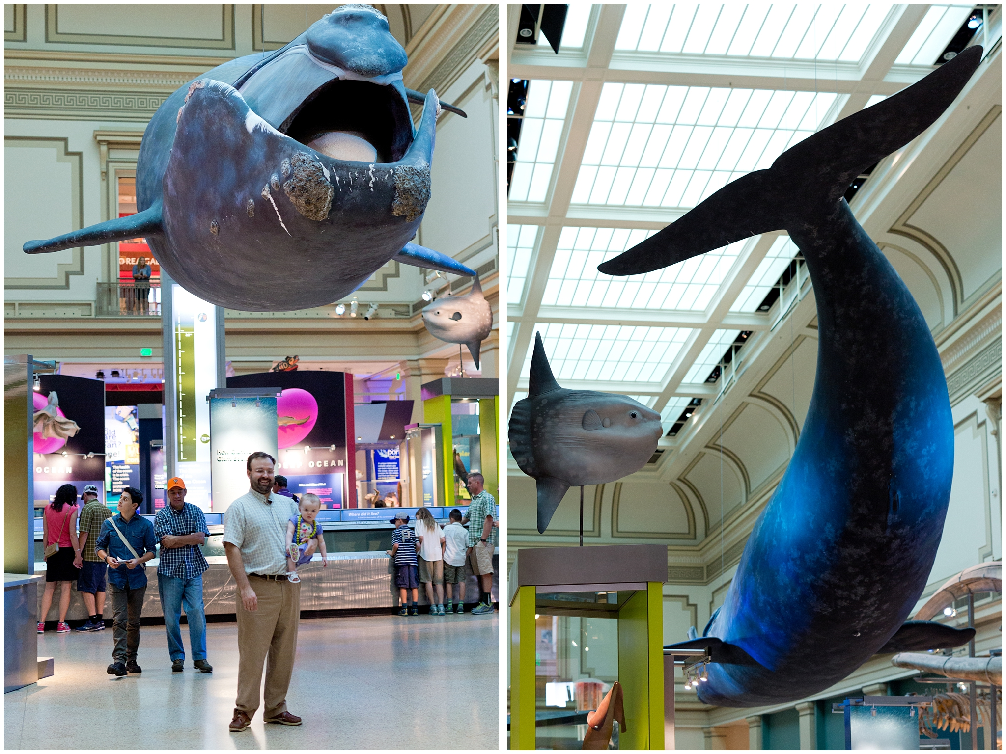 Smithsonian Museum of Natural History Oceans Hall (whale)