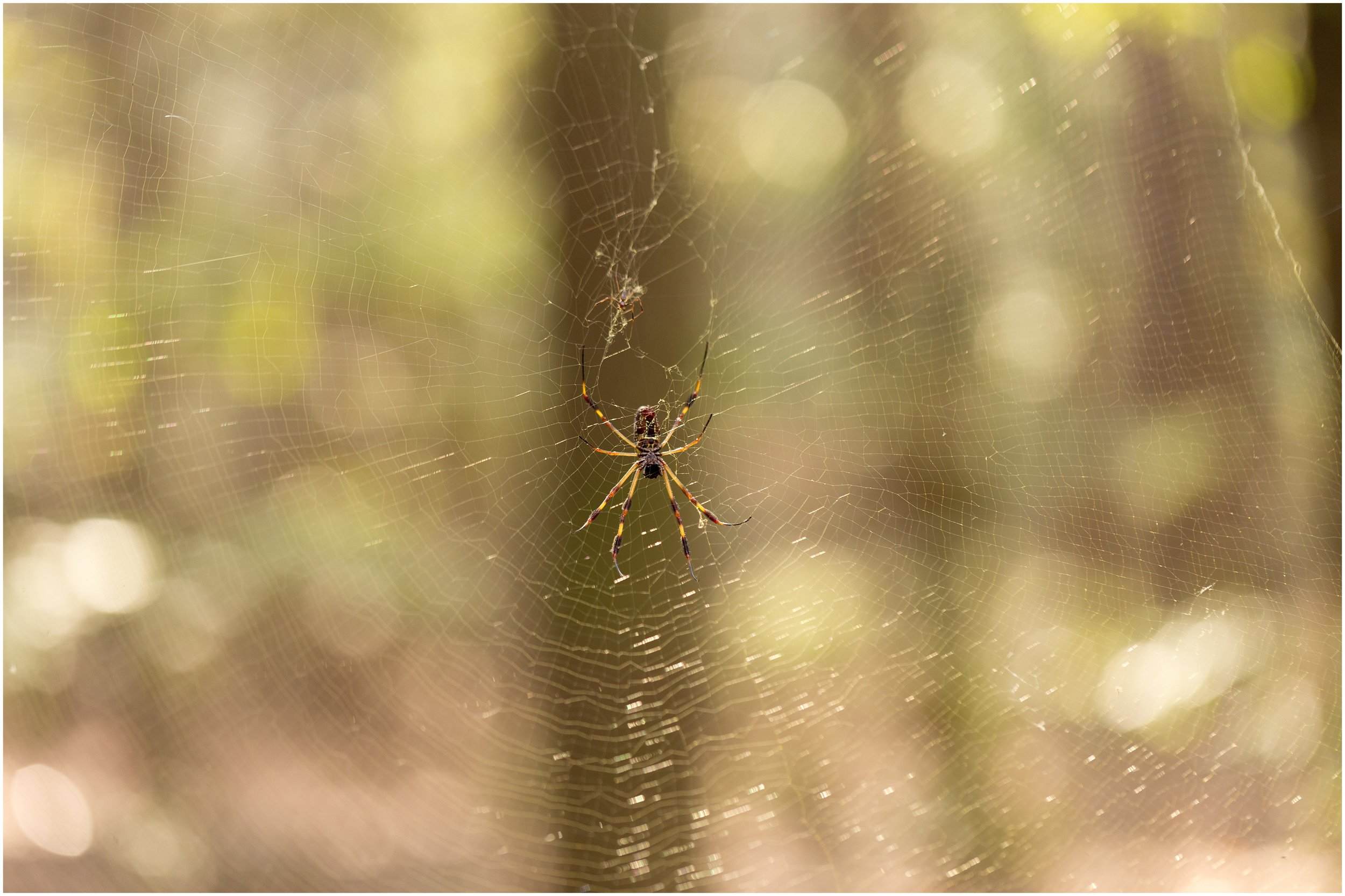 spider on web in nature (Uninvented Colors Photography)