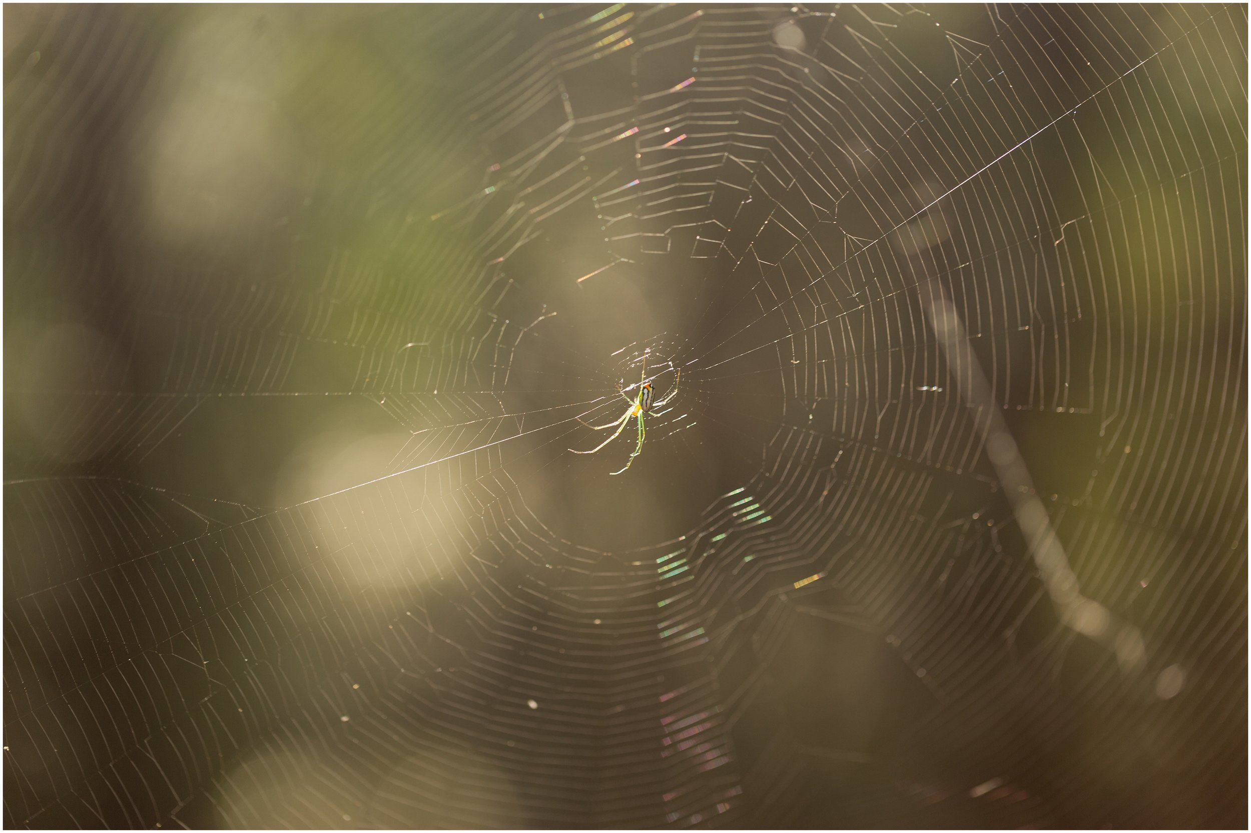 spider on web on hiking trail