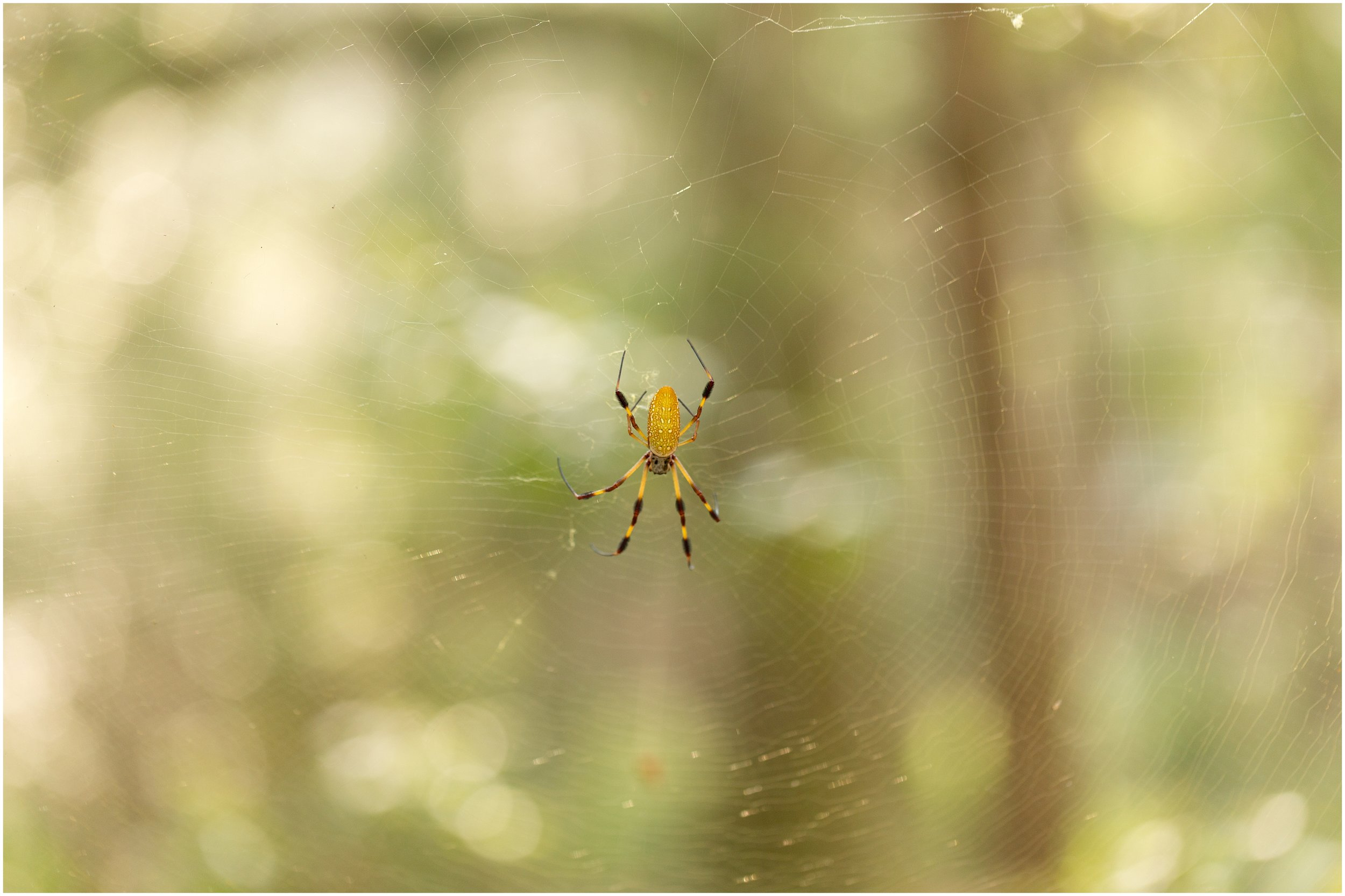 spider with web and bokeh (Uninvented Colors Photography)