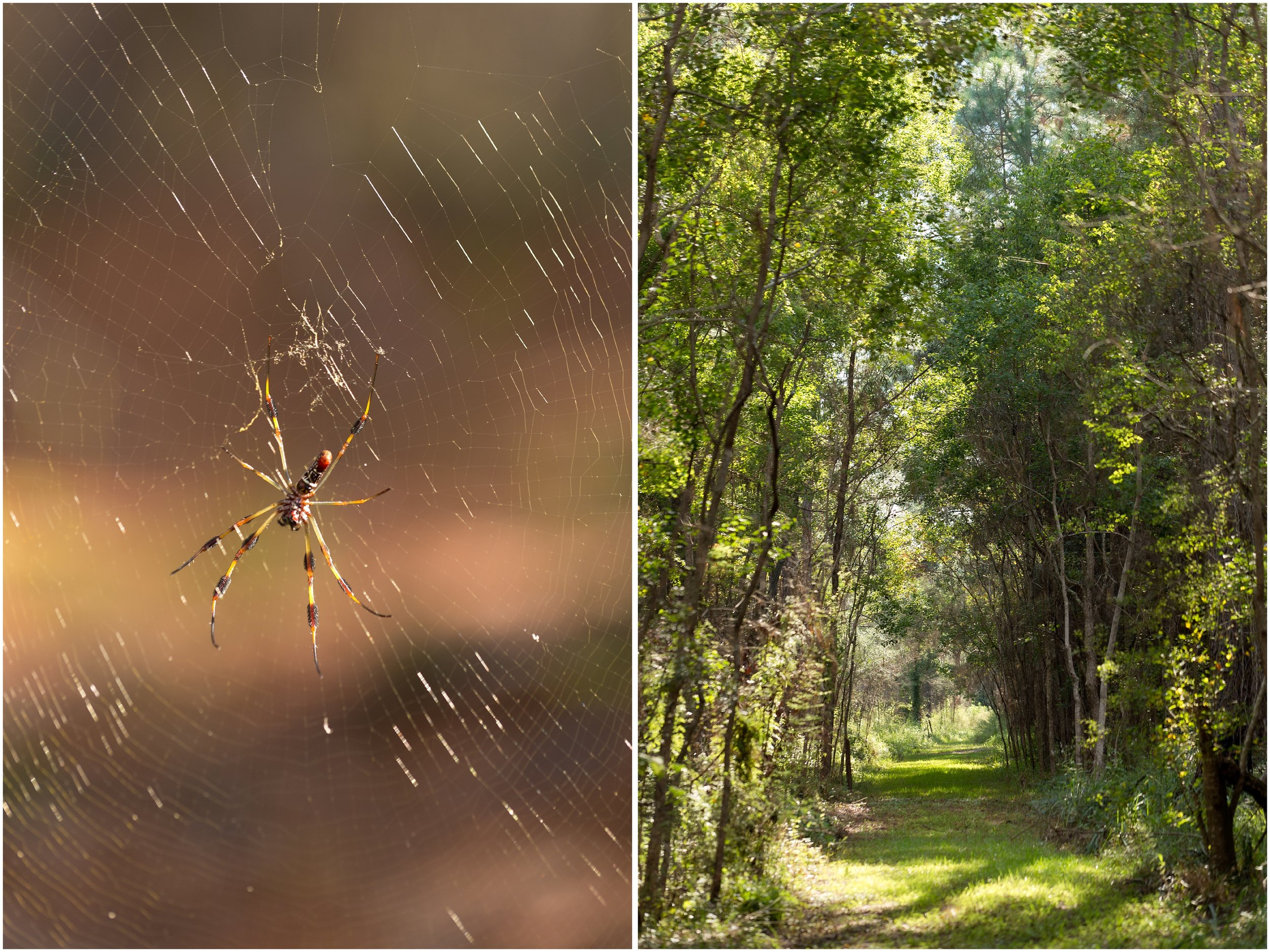 spider and natura trail