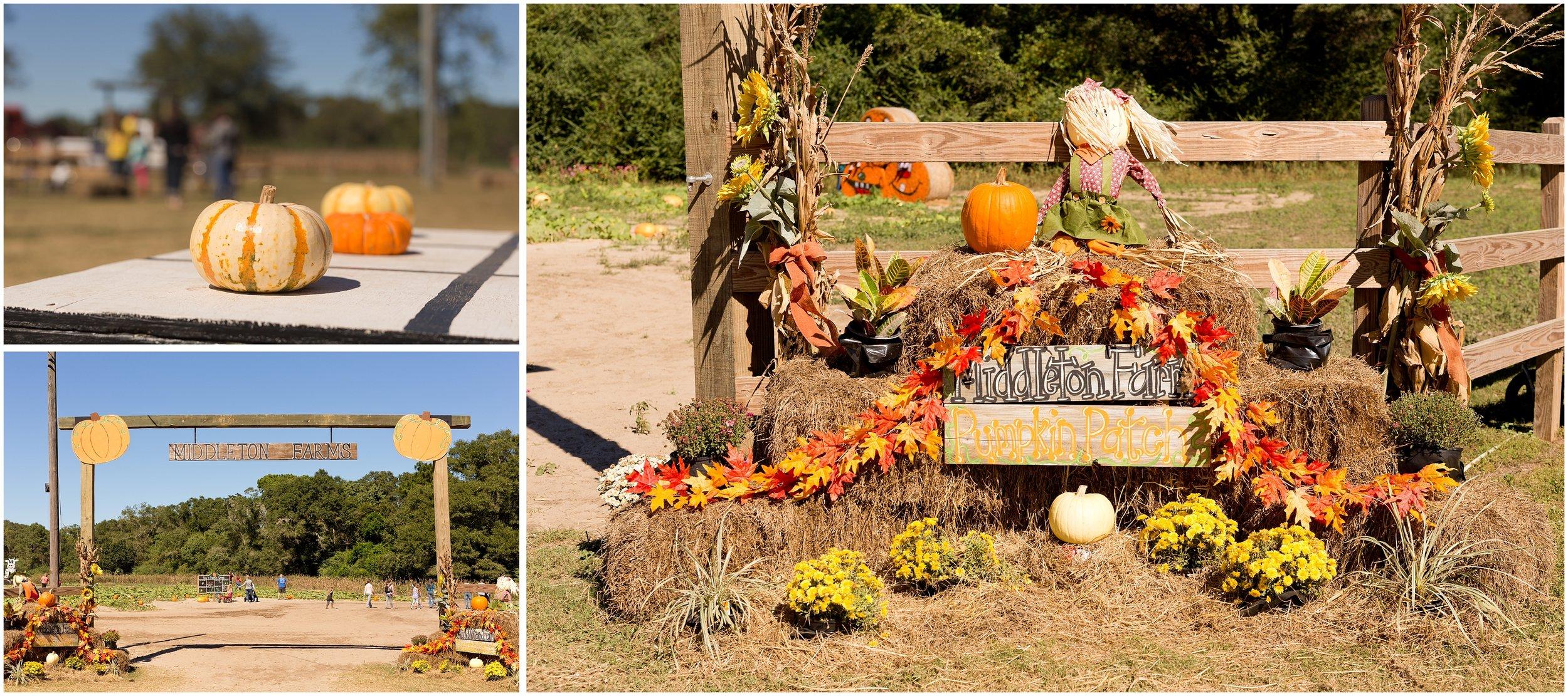 Middleton Farms pumpkin patch
