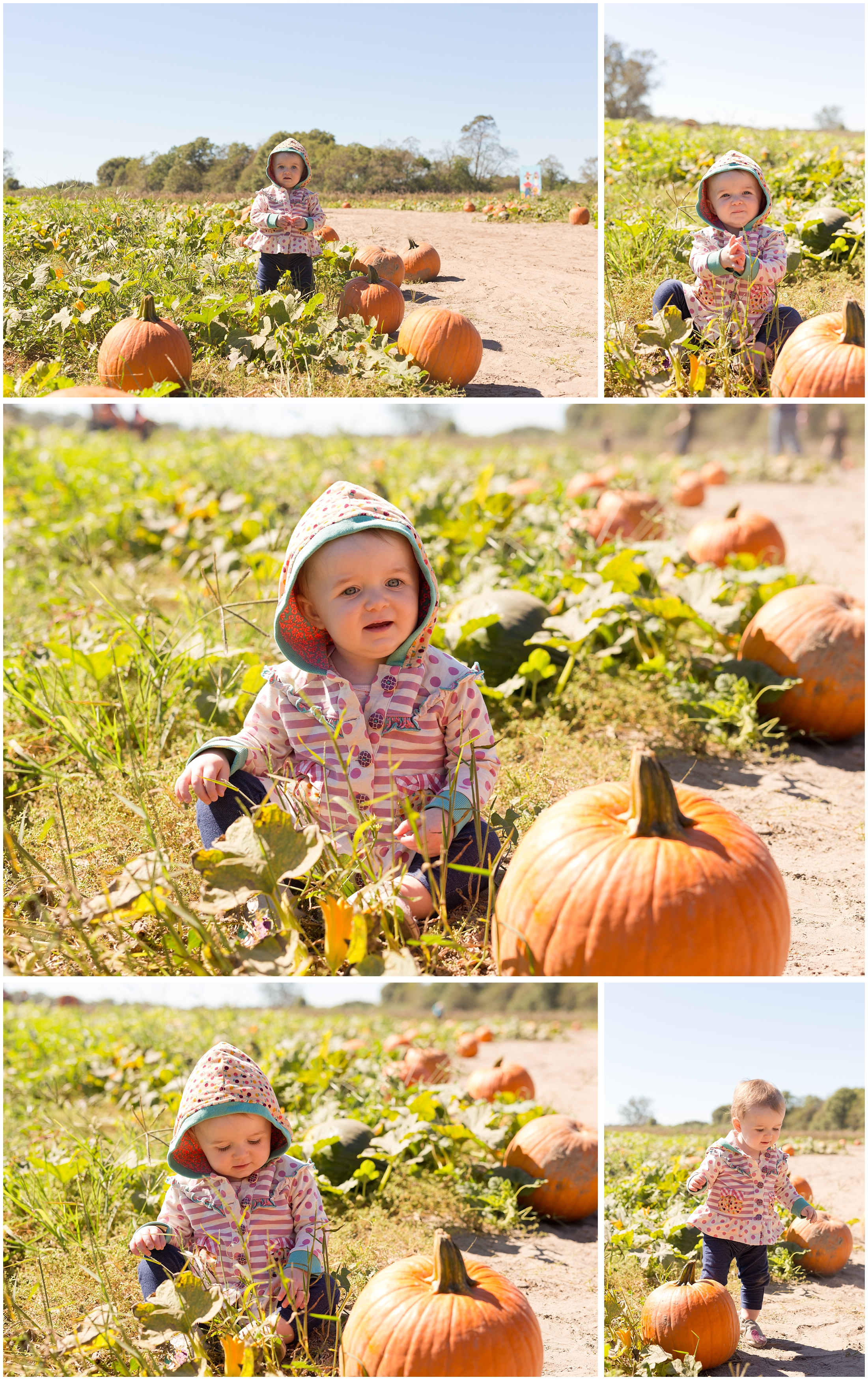 cute baby girl in pumpkin patch with Matilda Jane jacket