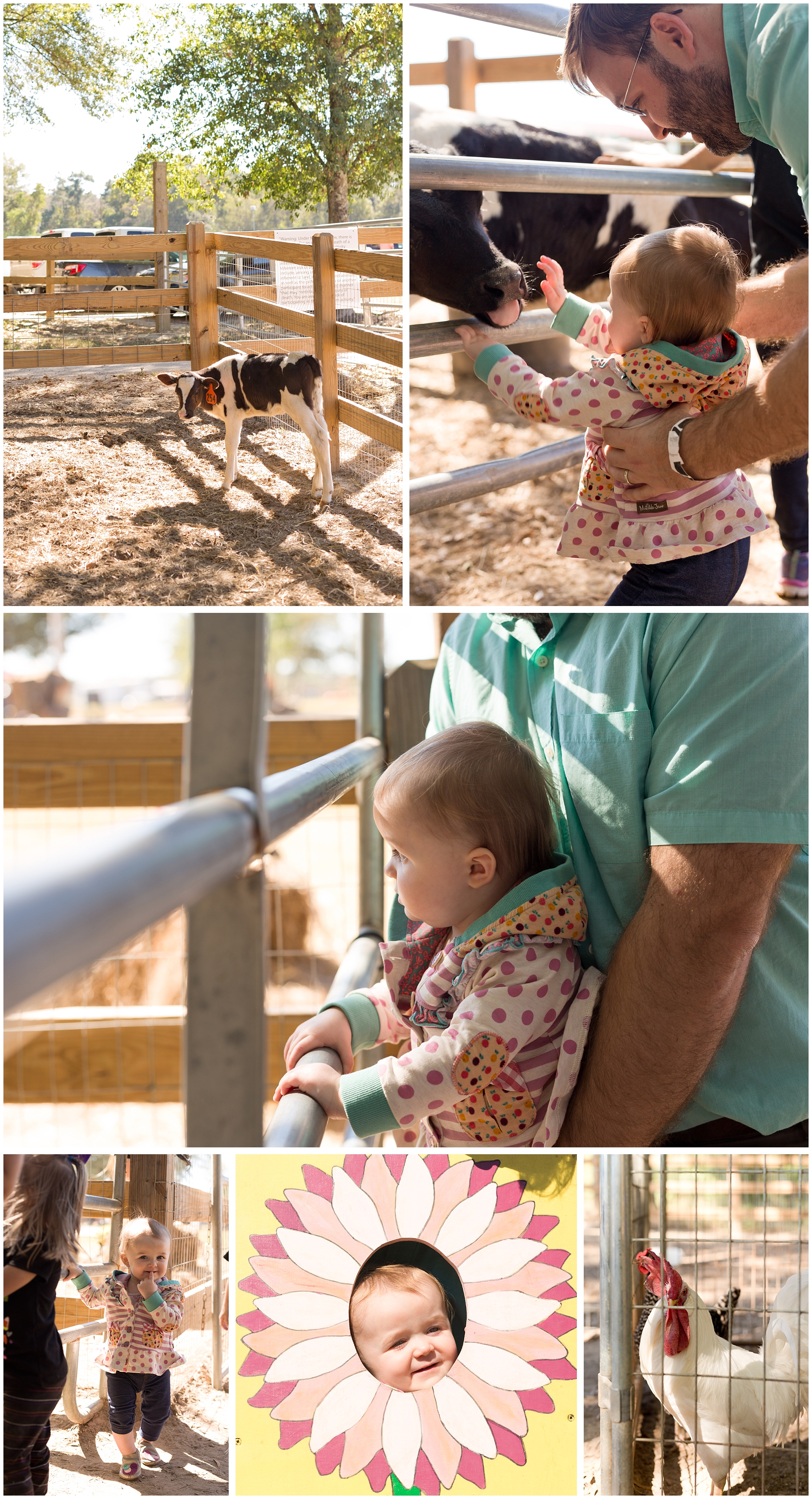 petting zoo at pumpkin patch (little girl and daddy)