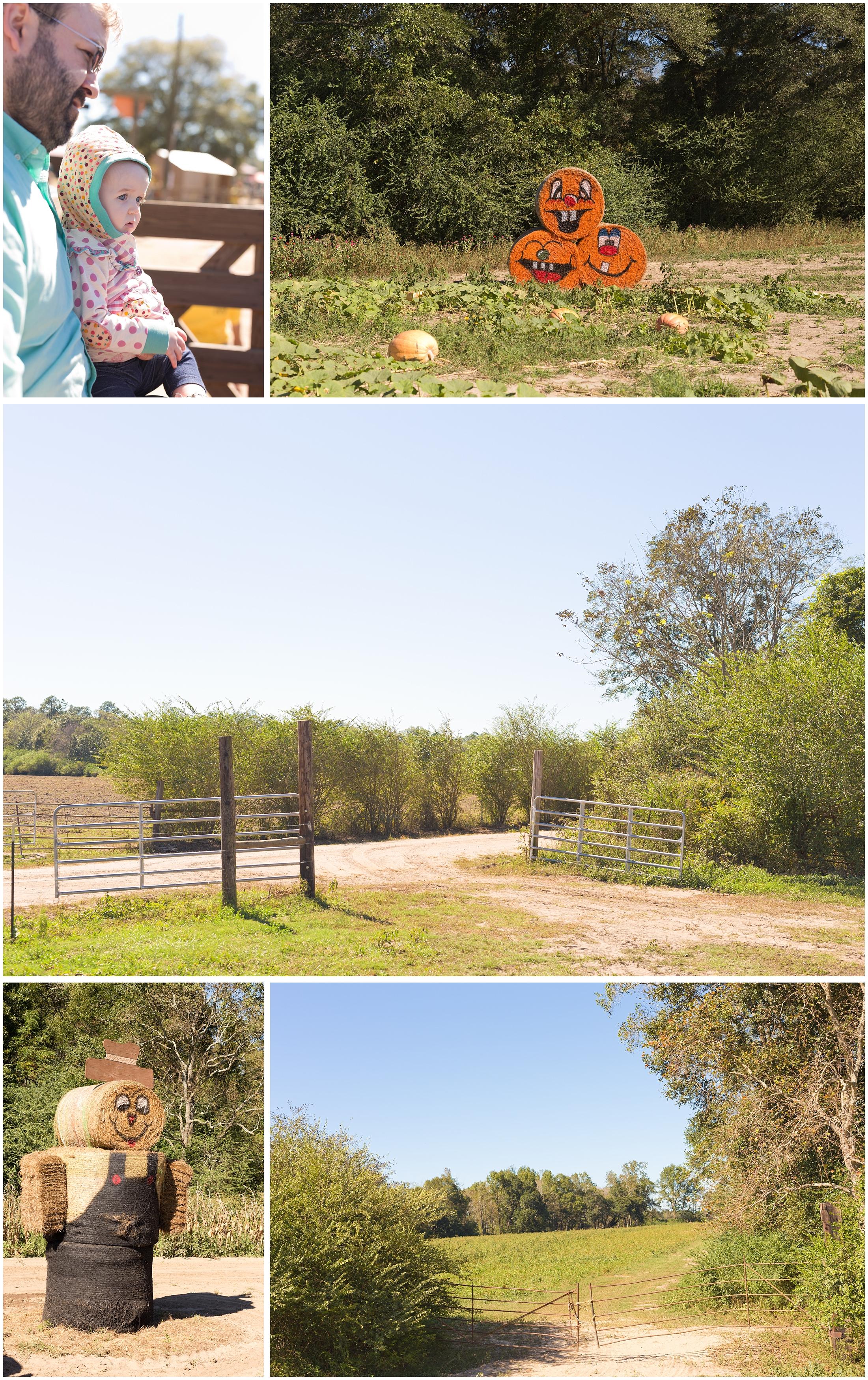 hayride at pumpkin patch