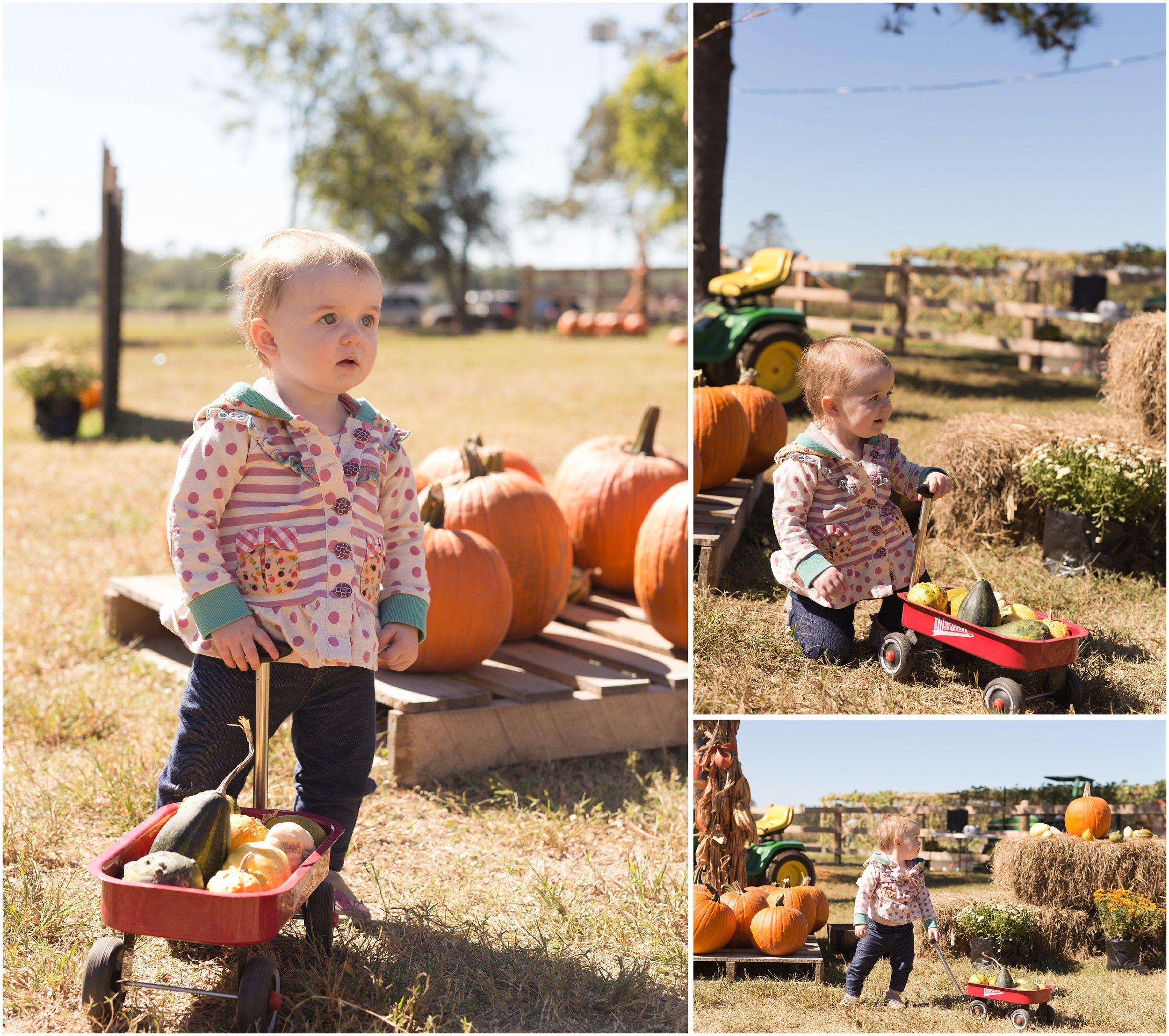 wagon at pumpkin patch