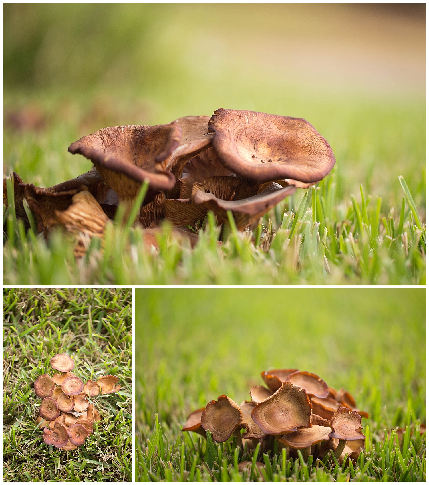 mushrooms after rain in Southern Mississippi