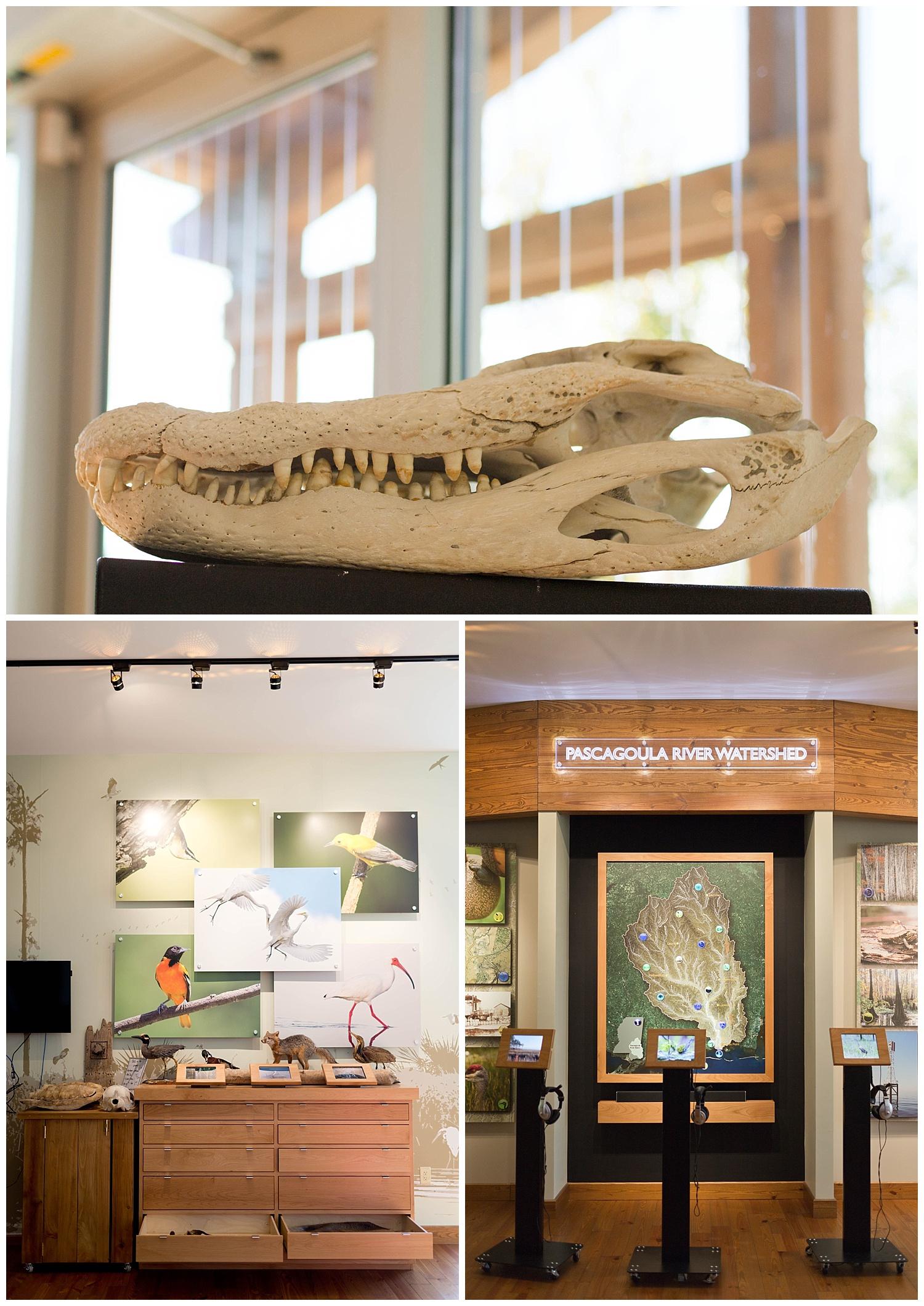 interior of Pascagoula River Audubon Center museum