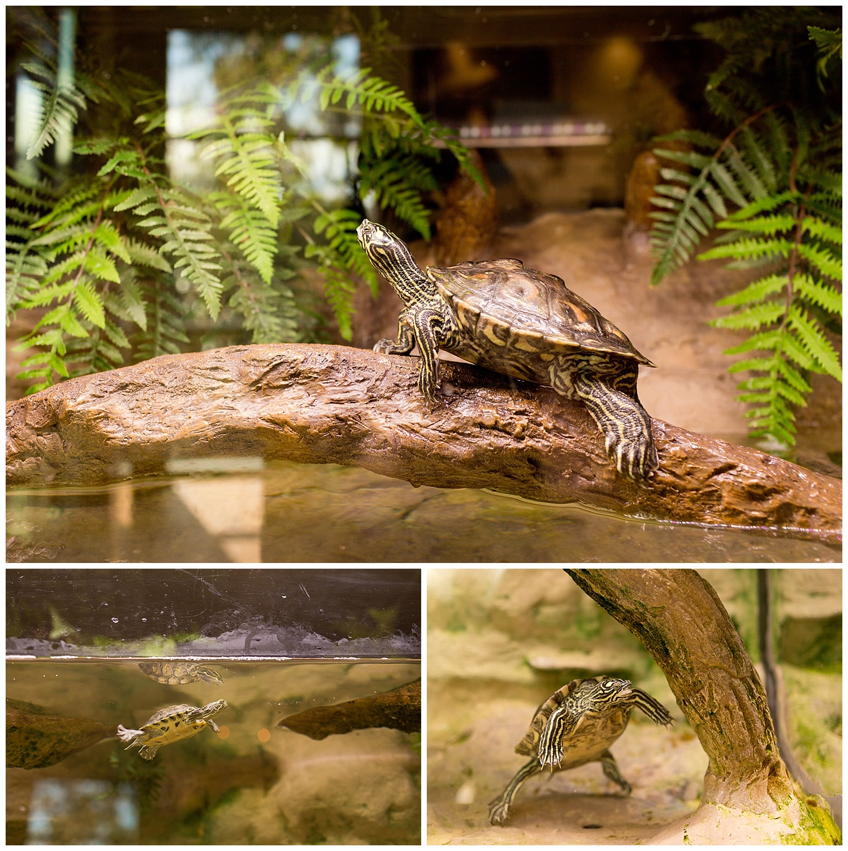 river turtles at Pascagoula River Audubon Center