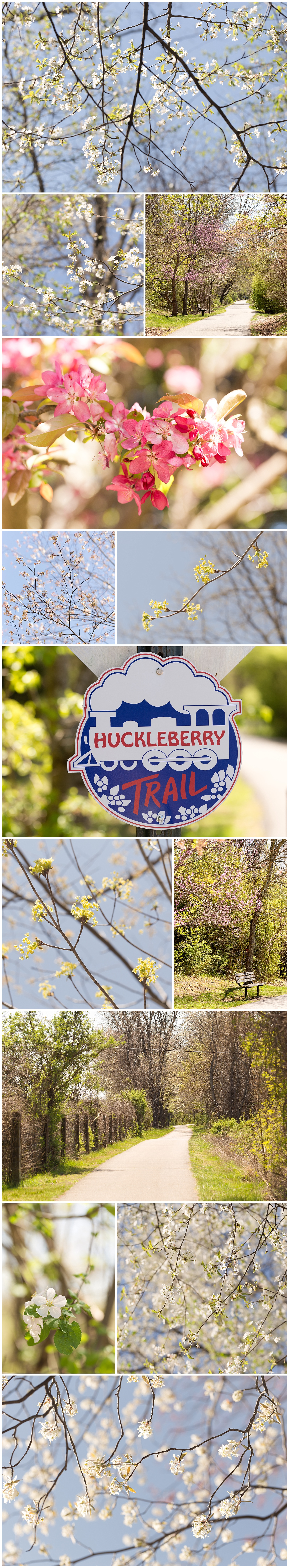 nature photography on Huckleberry Trail, Virginia flower photos