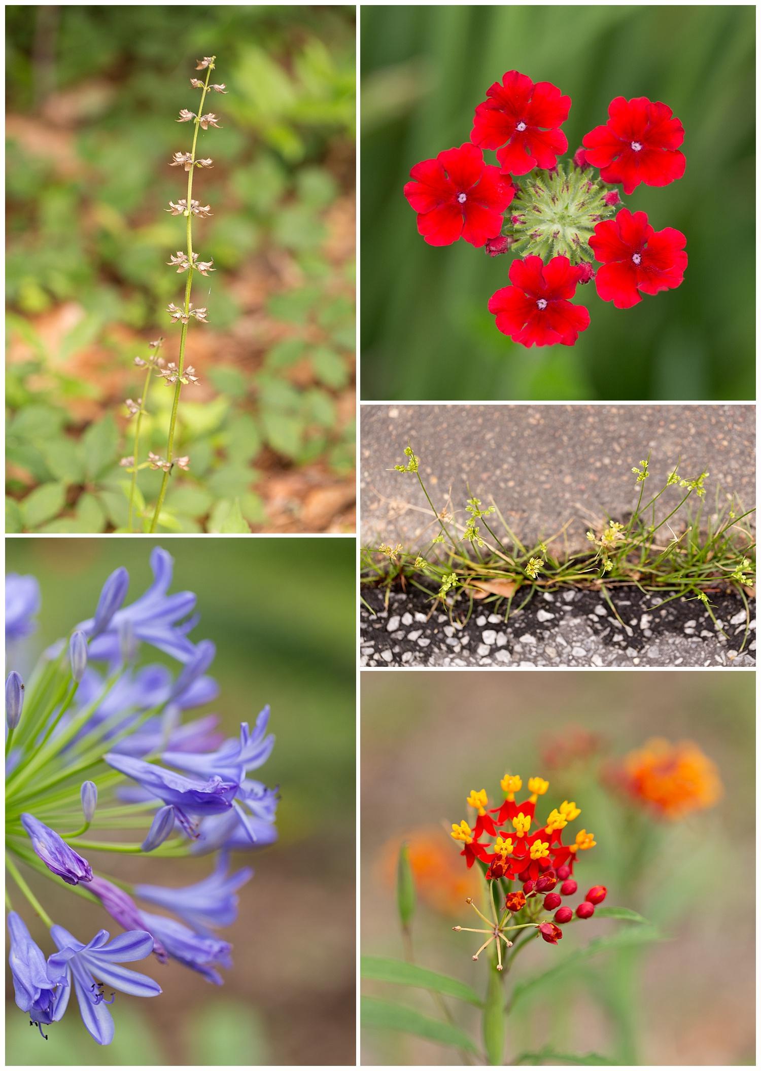 Mississippi Gulf Coast colorful macro flower photos