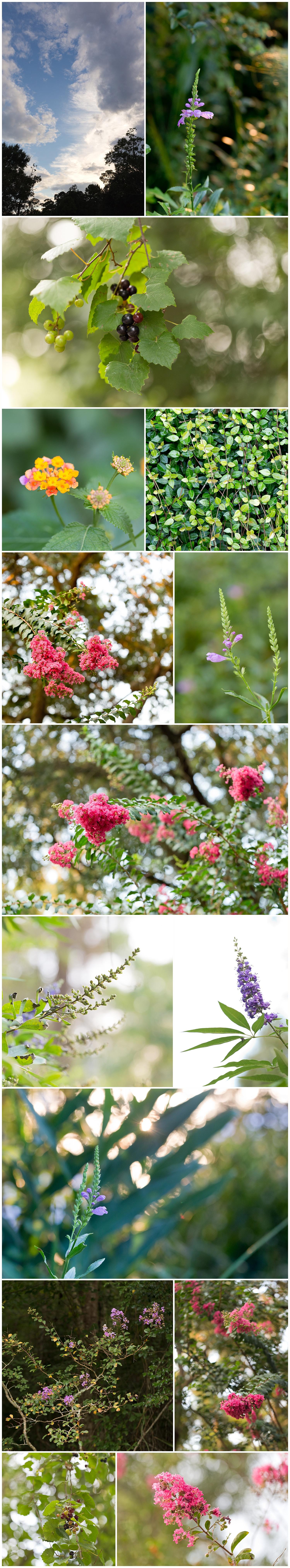 beautiful summer flower in Fort Bayou Estates, Ocean Springs, Mississippi