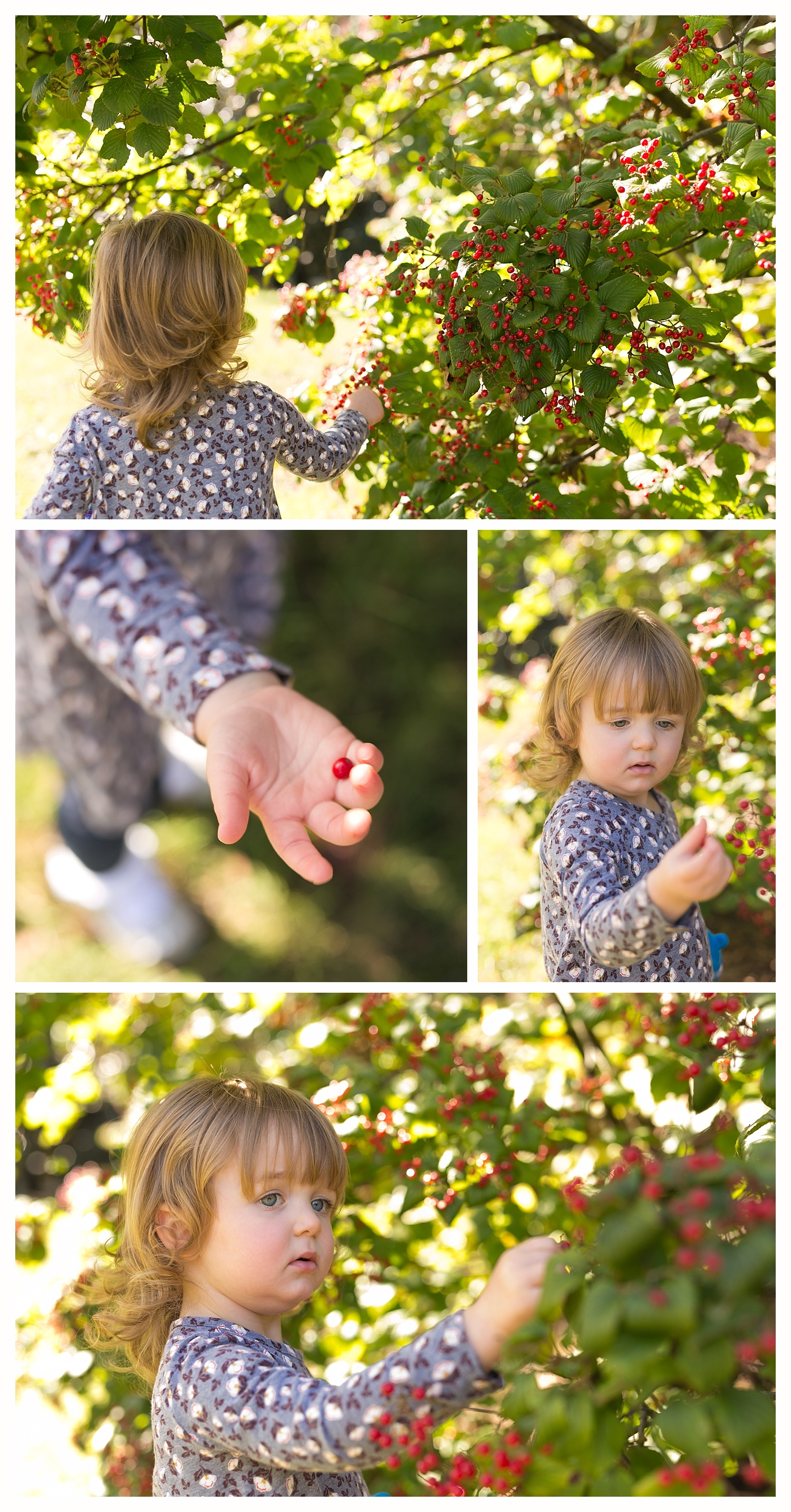 little girl examining red berries at Cheekwood Estate and Gardens