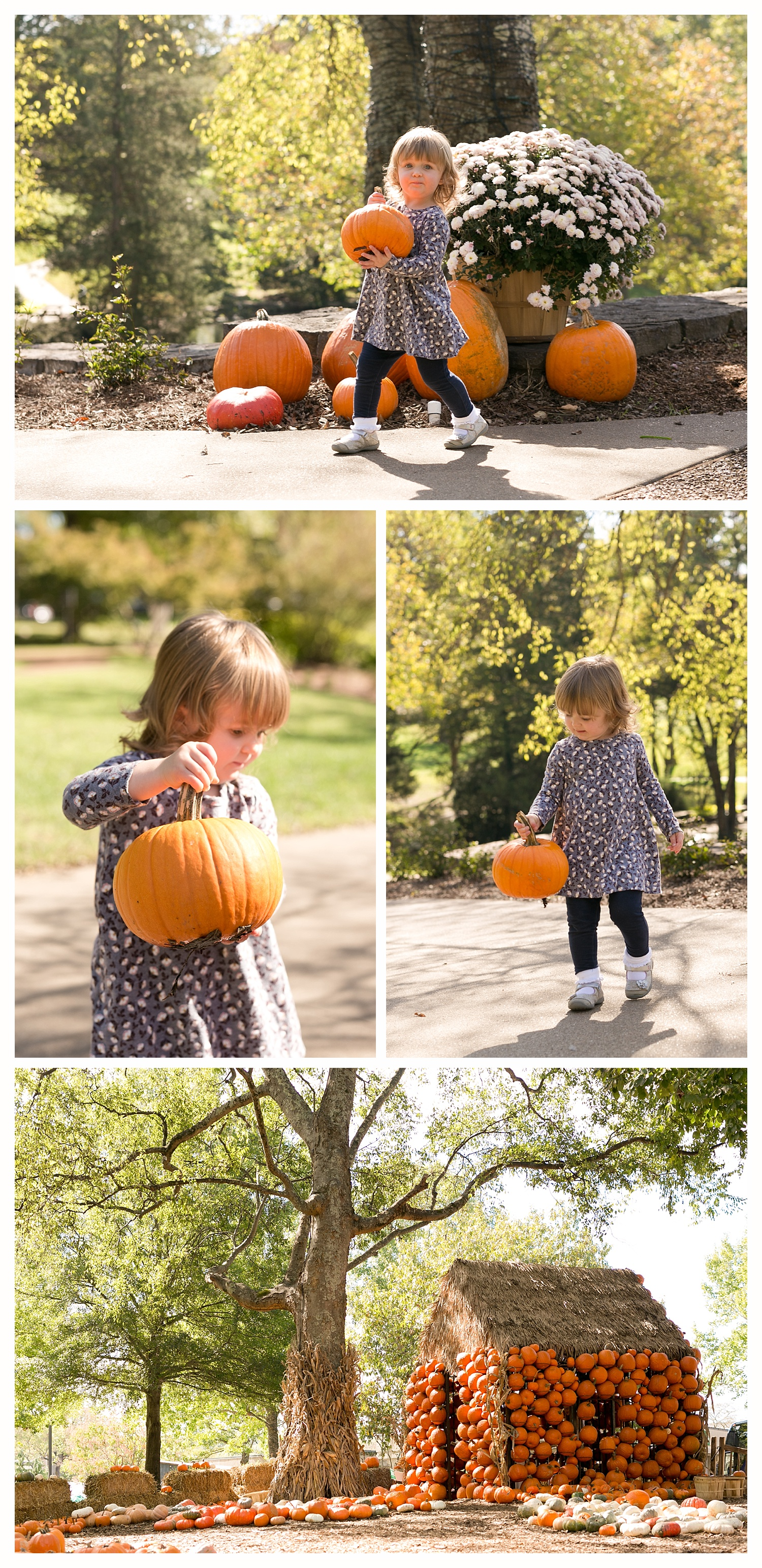 little girl with pumpkins at Cheekwood Estate and Gardens