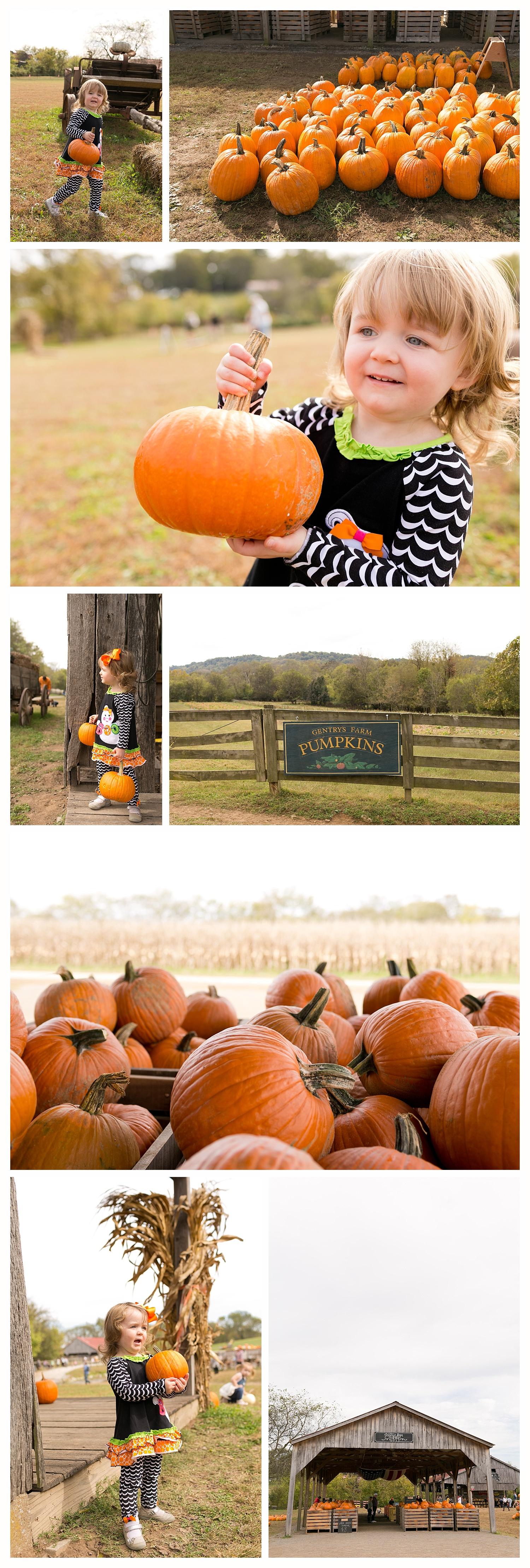 pumpkins at Gentry's Farm, Franklin, TN