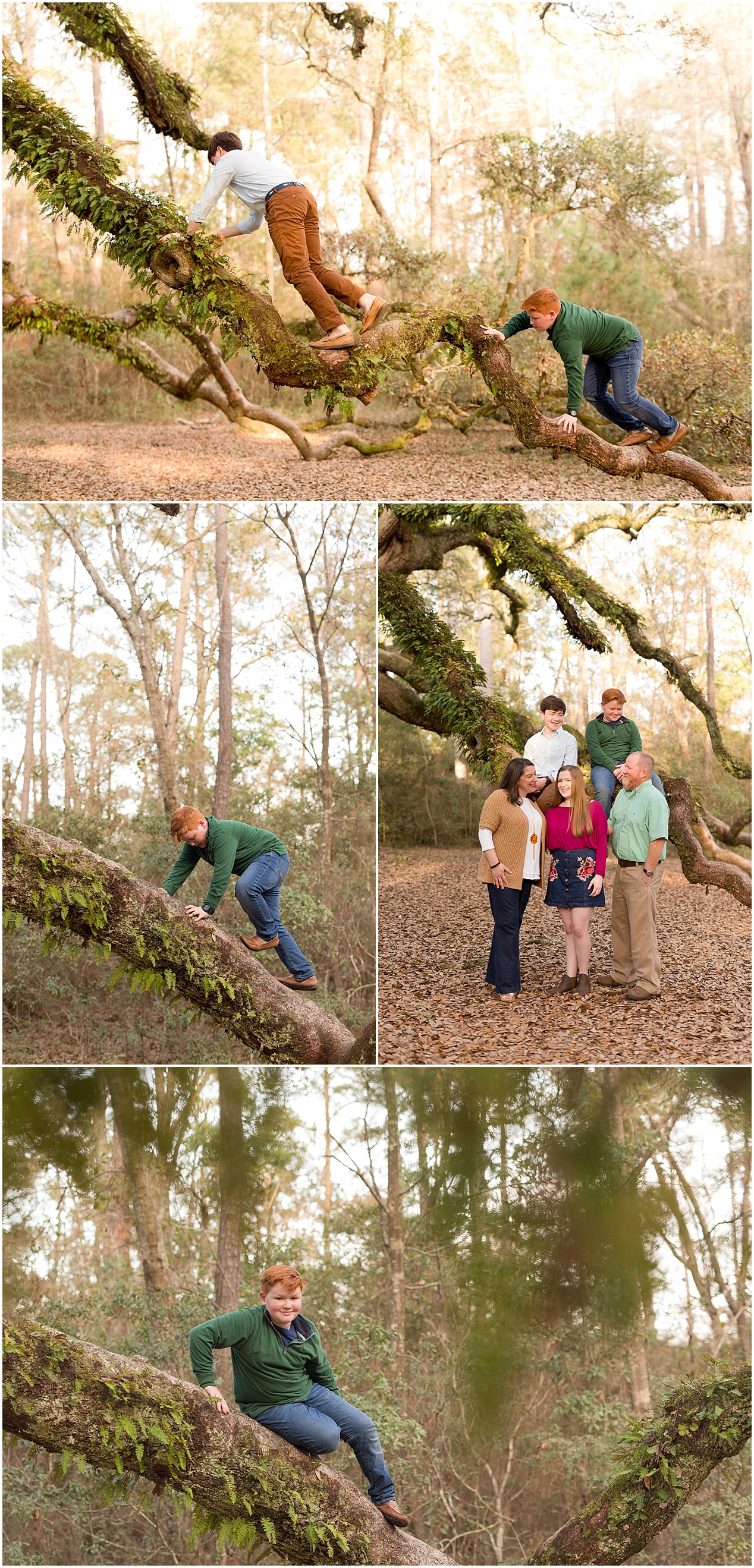 brothers climbing trees during family portrait session