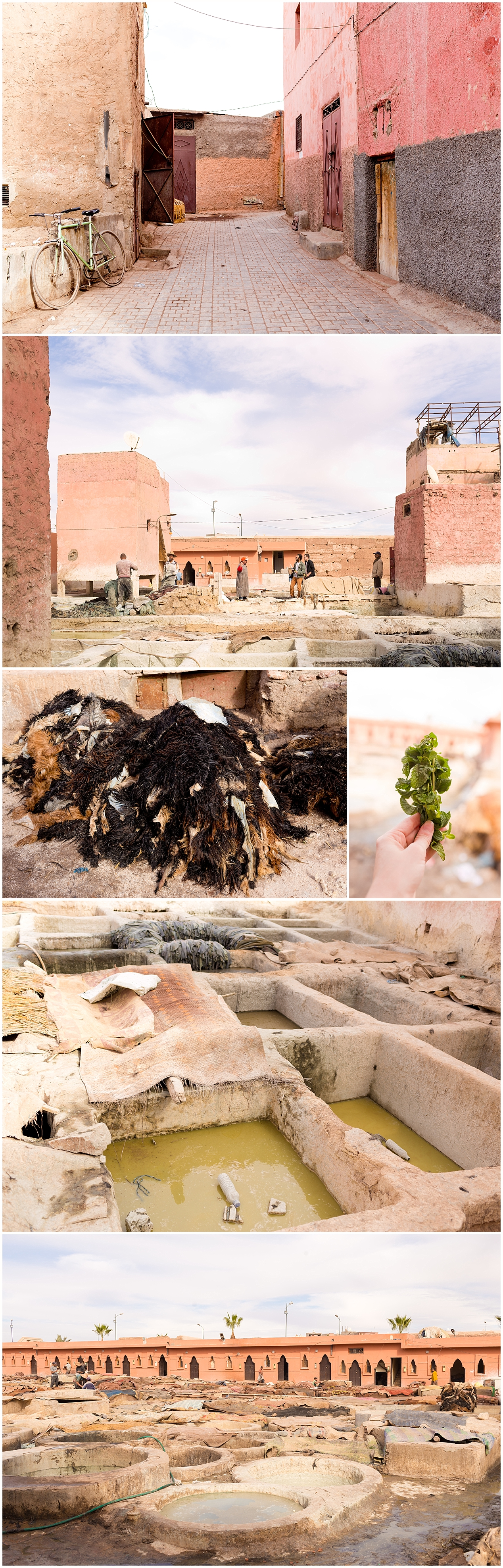 tannery tour in Marrakech, Morocco