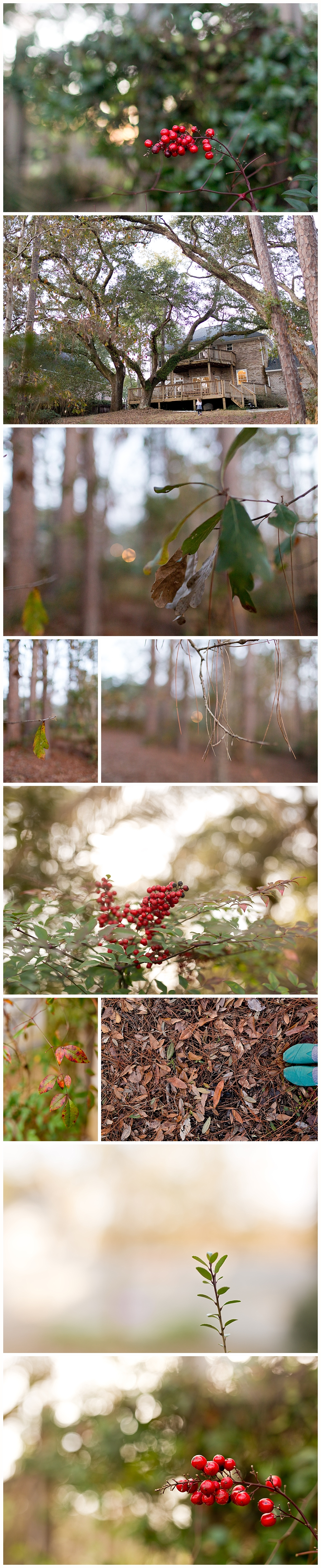 Ocean Springs, Mississippi nature photography - back yard in Bienville Place