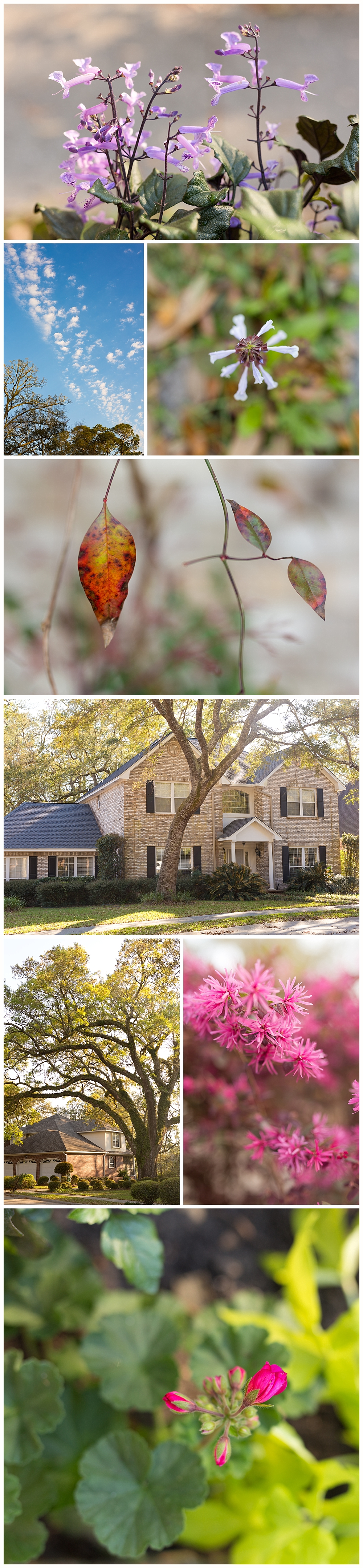 nature photography in Bienville Place neighborhood in Ocean Springs, Mississippi