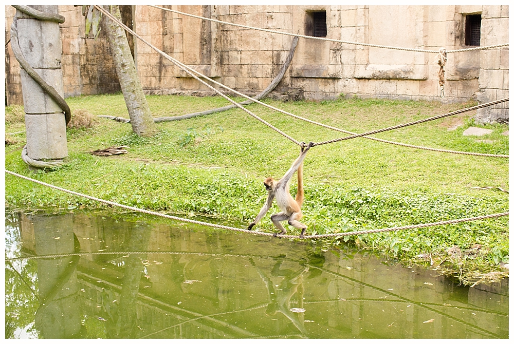 monkey at Audubon Zoo New Orleans