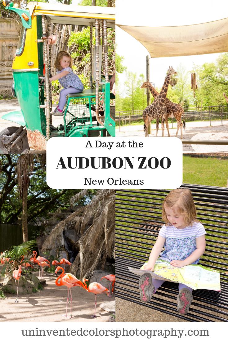 Audubon Zoo New Orleans blog post