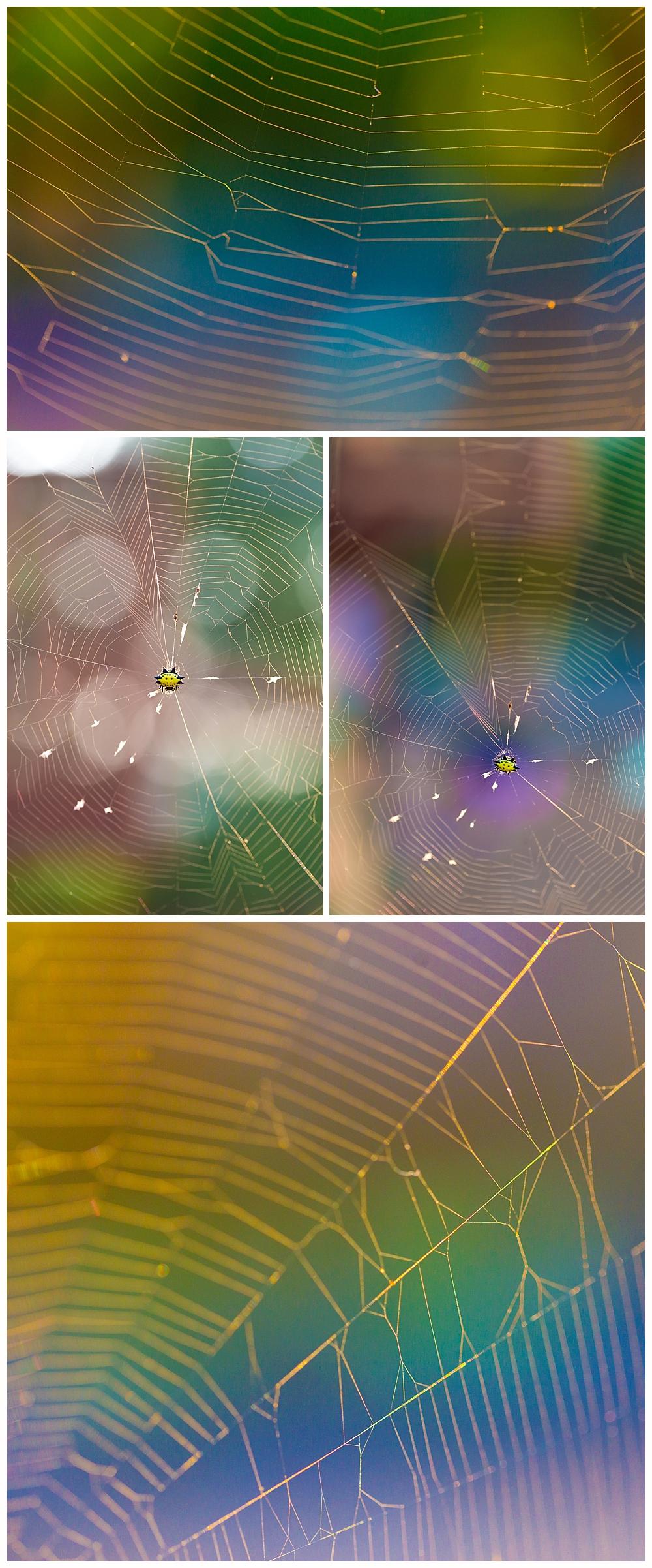 colorful spider web macro photos