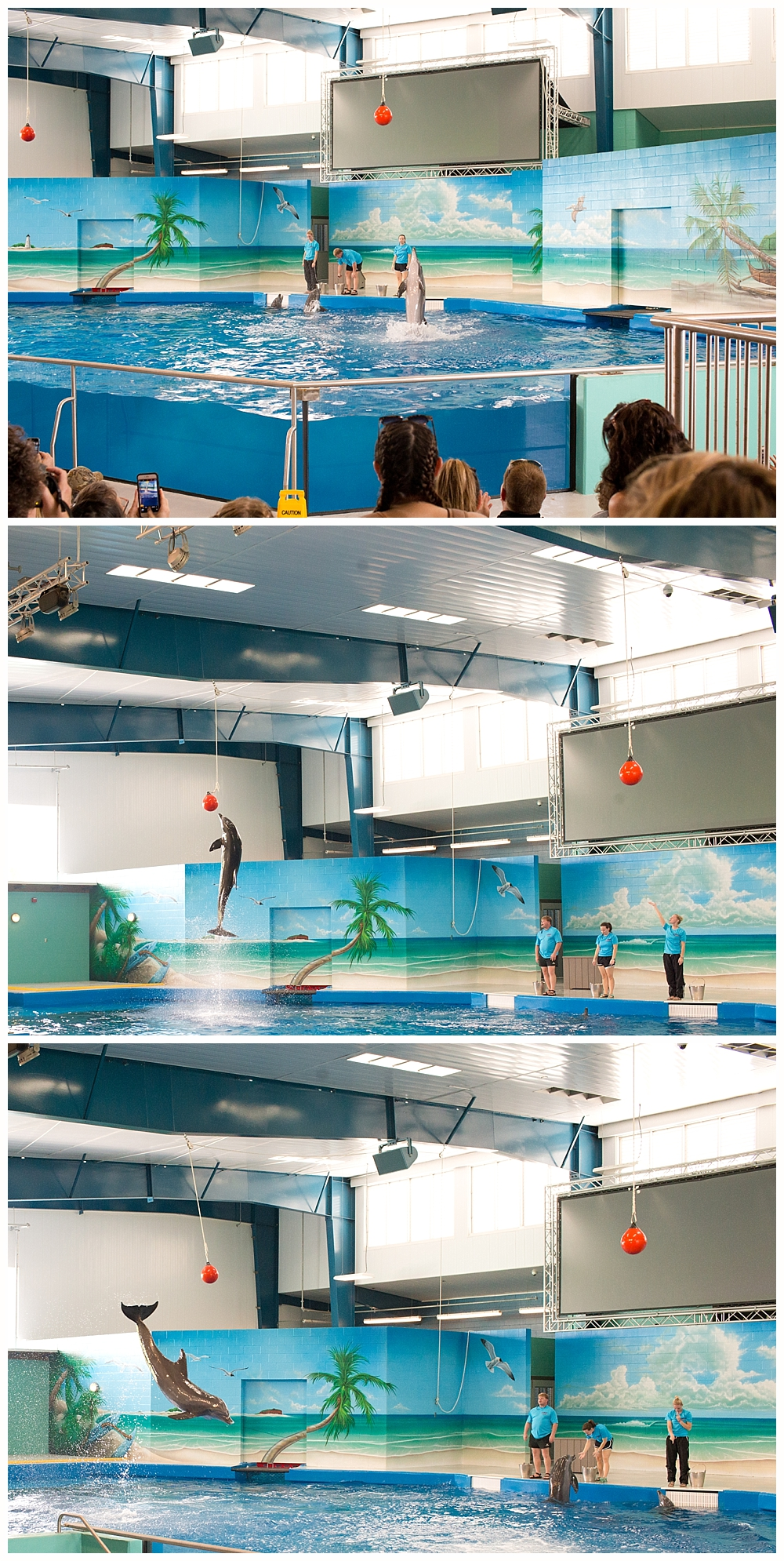 dolphin show at Ocean Adventures Marine Park in Gulfport, MS
