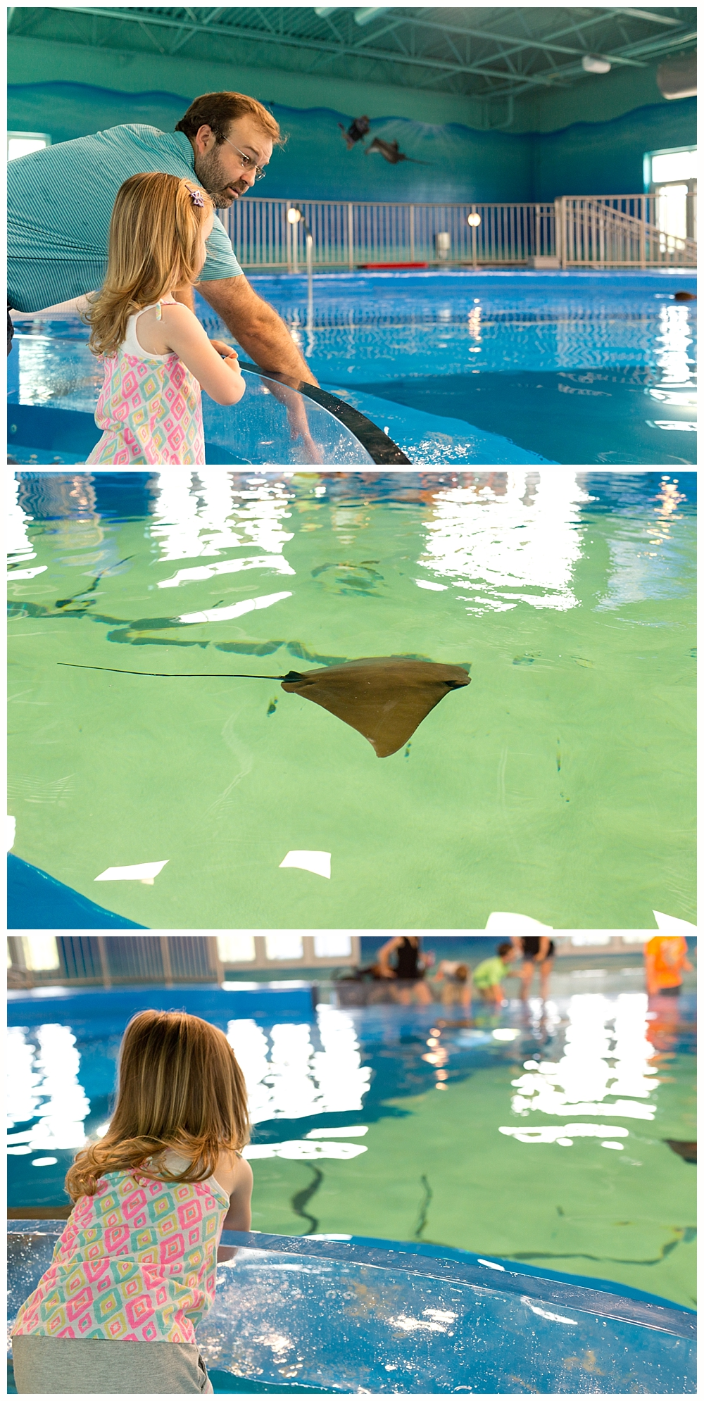 ray pool at Ocean Adventures Marine Park