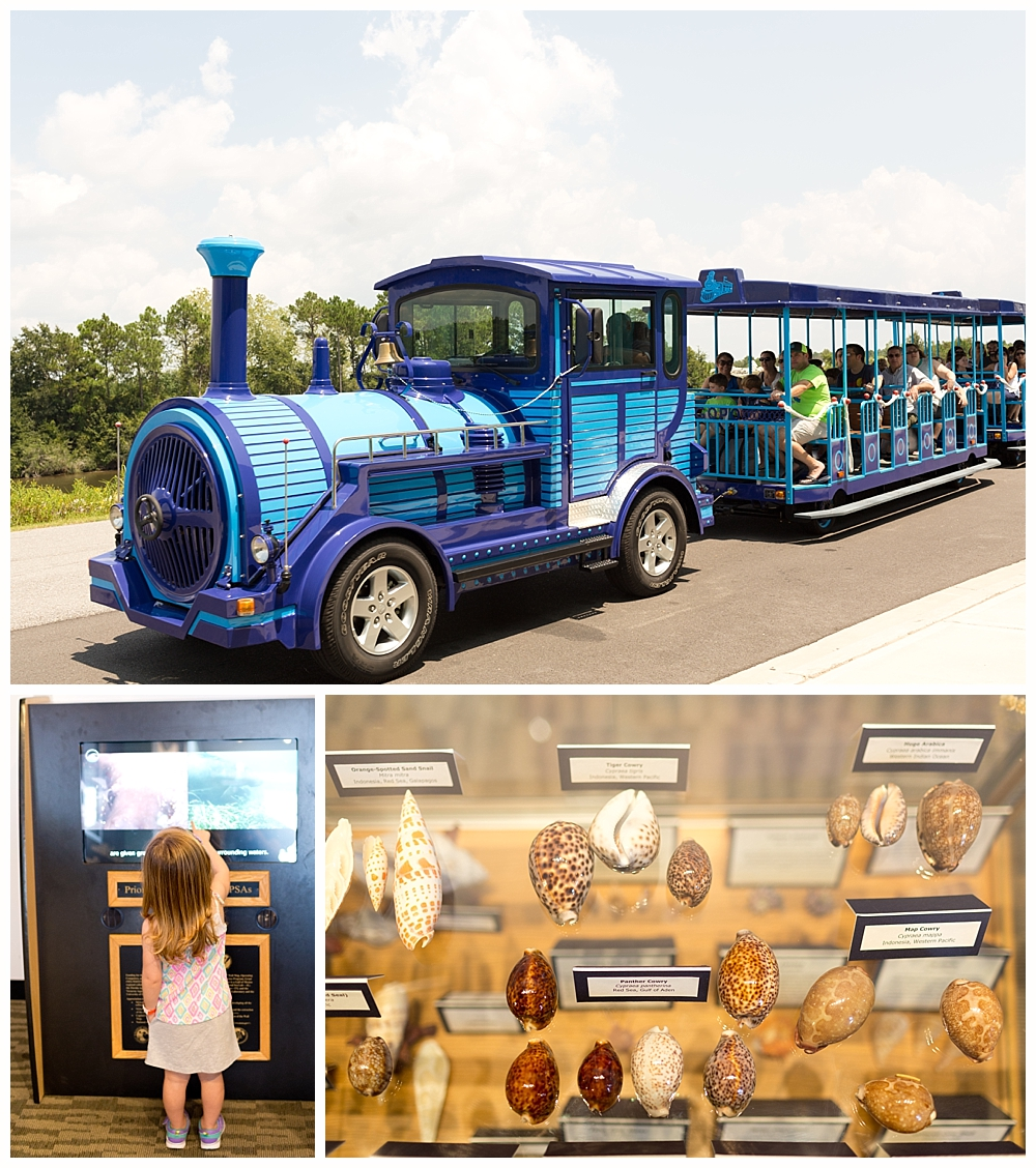 train ride to IMMS Discovery Center in Gulfport, MS