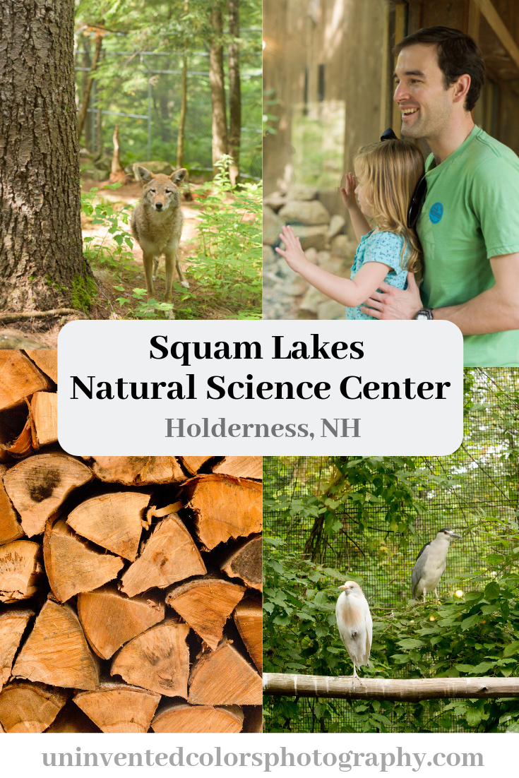 Family Visit to Squam Lakes Natural Science Center in Holderness, New Hampshire - travel blog post