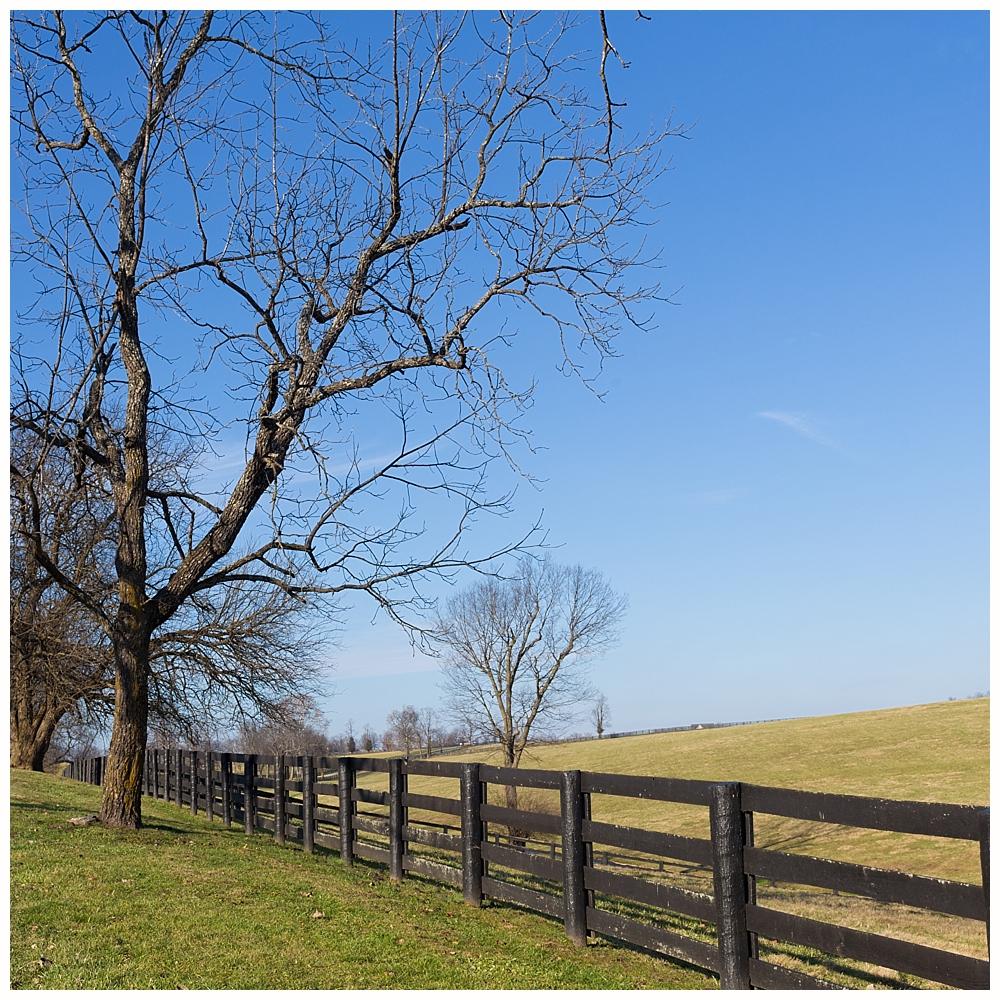 Kentucky Bluegrass horse country landscape
