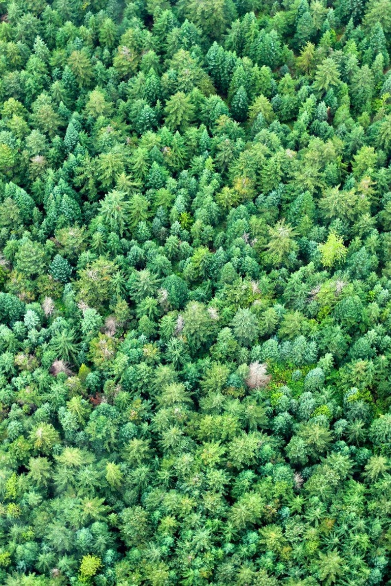 aerial photo of bright green evergreen trees