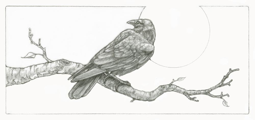 crow 01.jpg