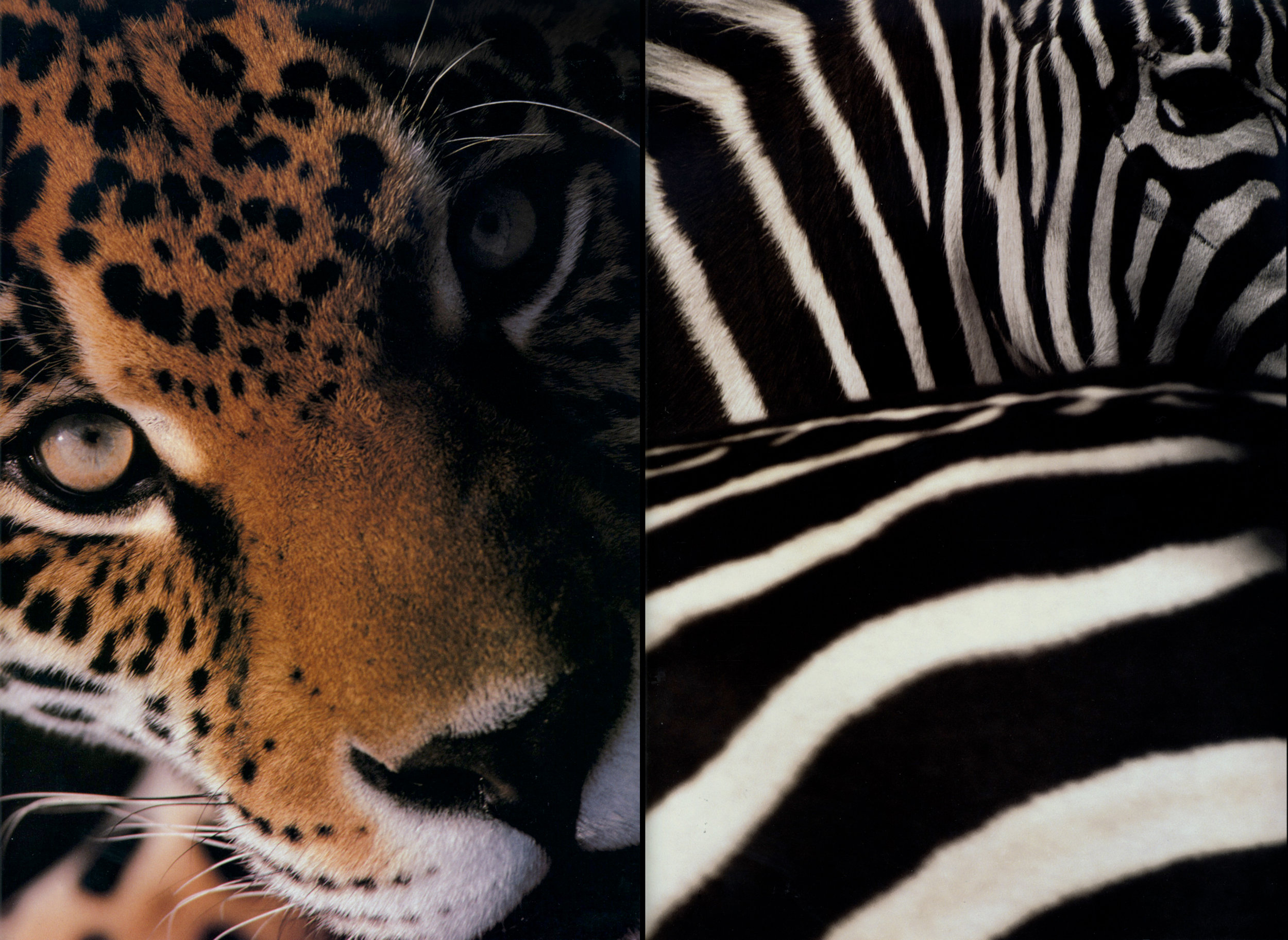 Houston-Zoo-9.jpg